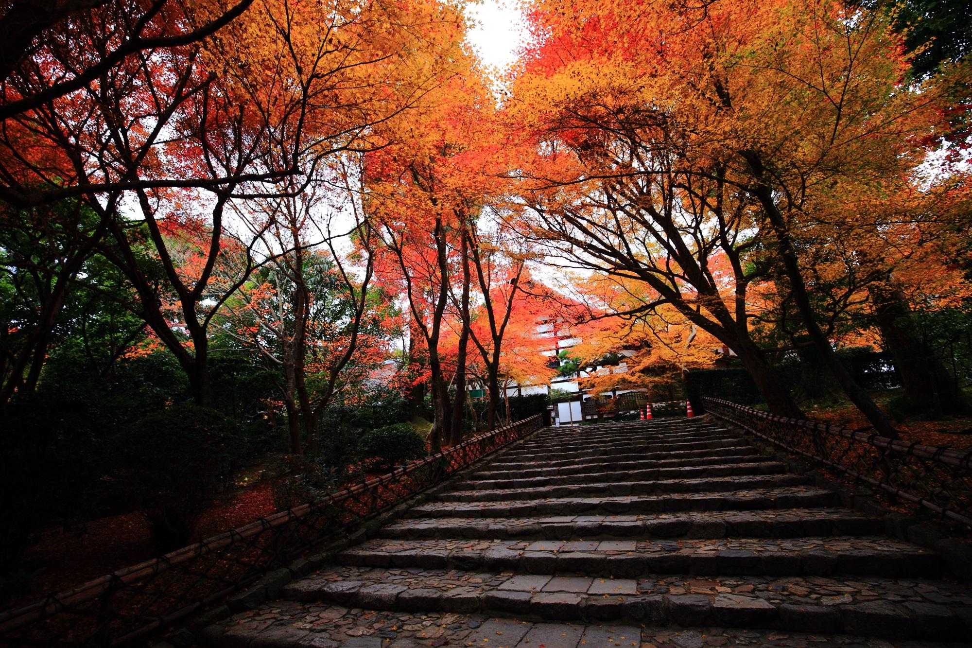 龍安寺の石段をと空を覆う見事な紅葉