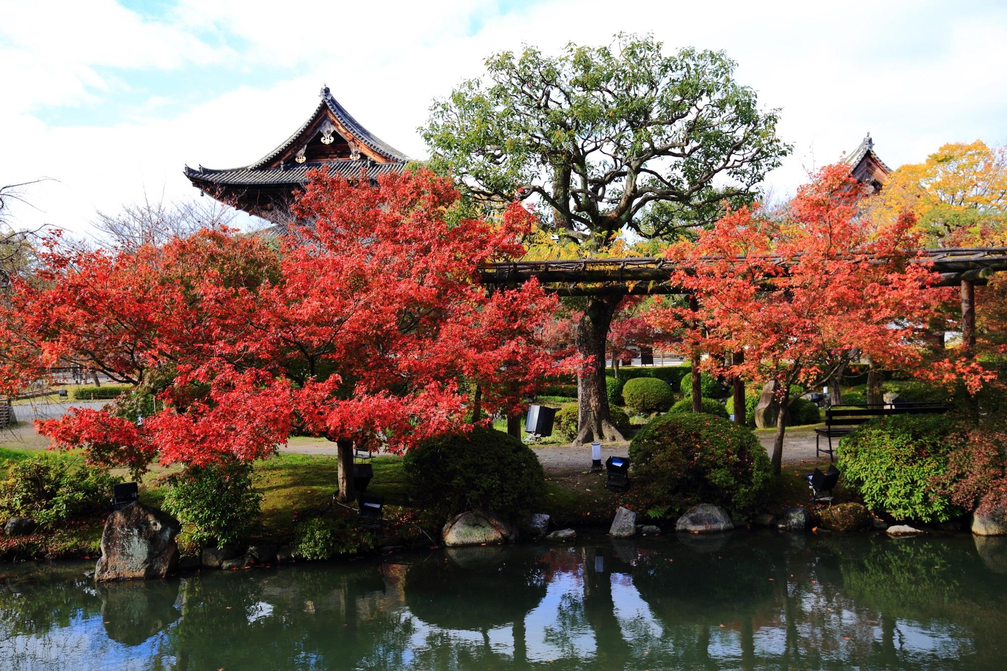 見ごろの紅葉につつまれた東寺の金堂と講堂