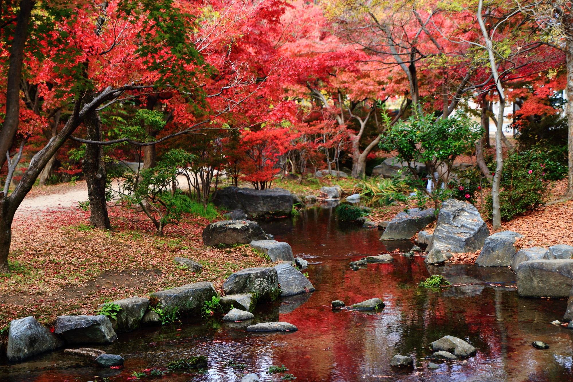 梅小路公園 紅葉 憩いの場の美しい紅葉