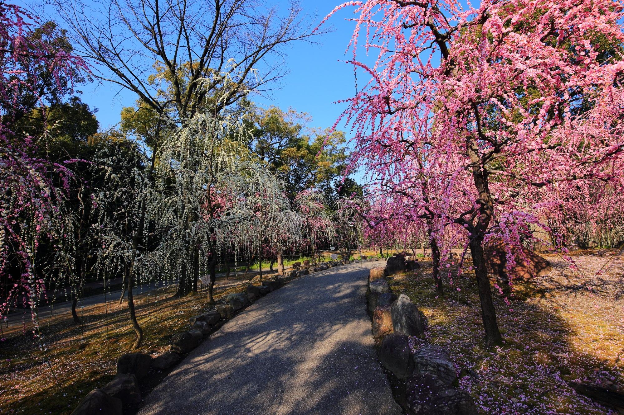 京都屈指のしだれ梅の名所の城南宮神苑の春の山