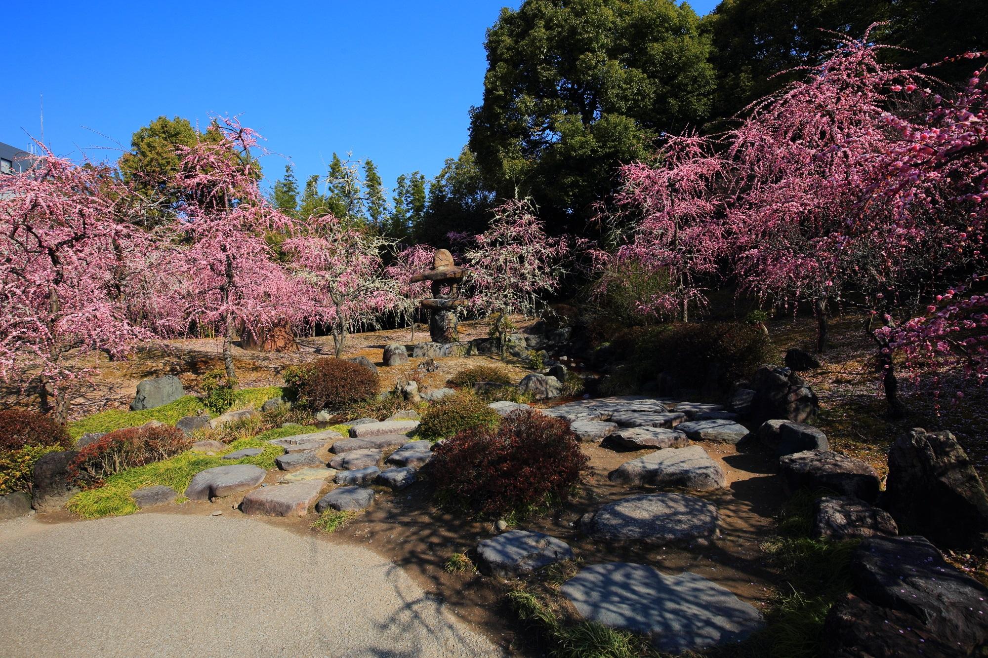 Kyoto Jyonangu-Shrine Garden Plum blossom spring