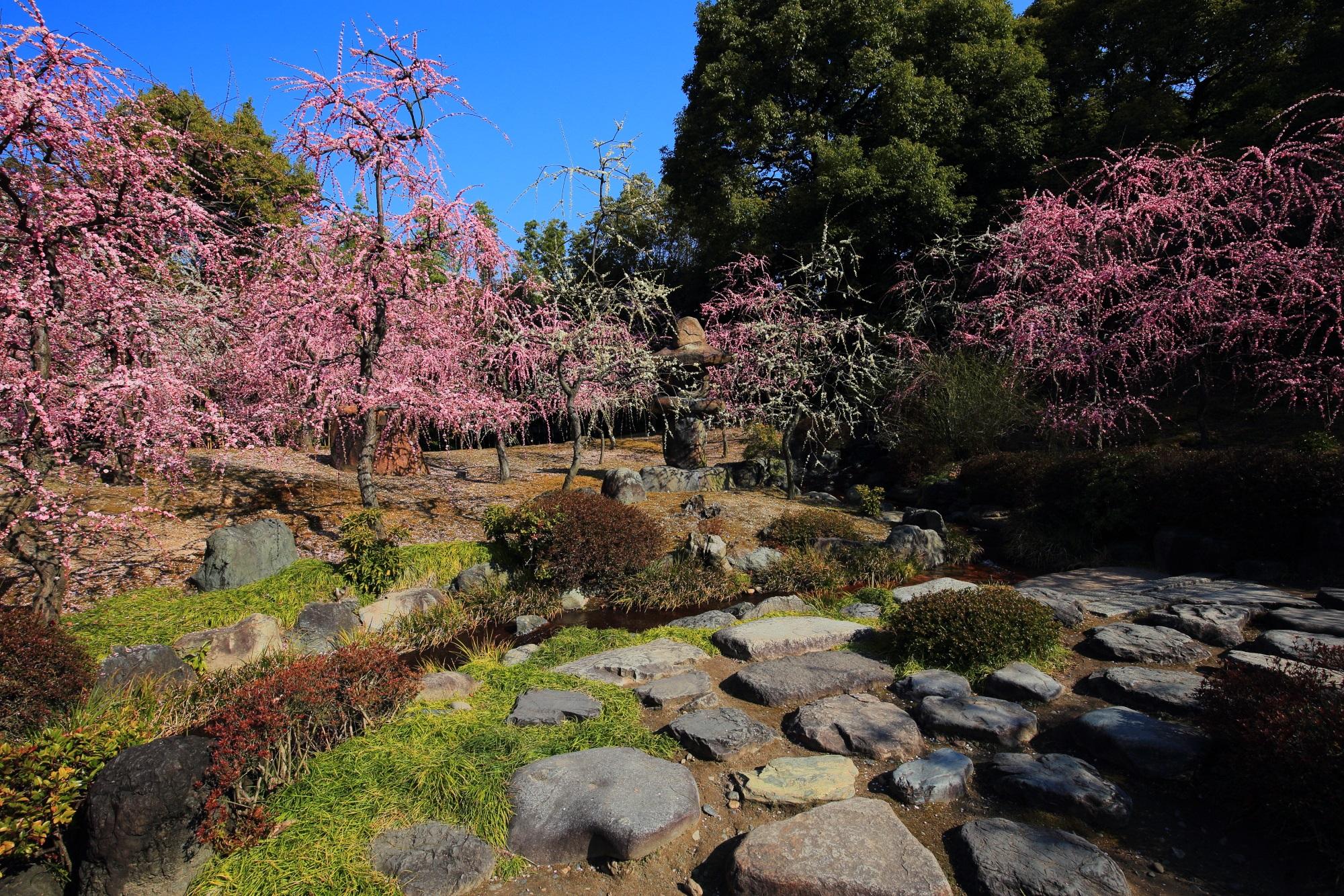 特徴ある形の燈籠の周辺を彩る春の山のしだれ梅