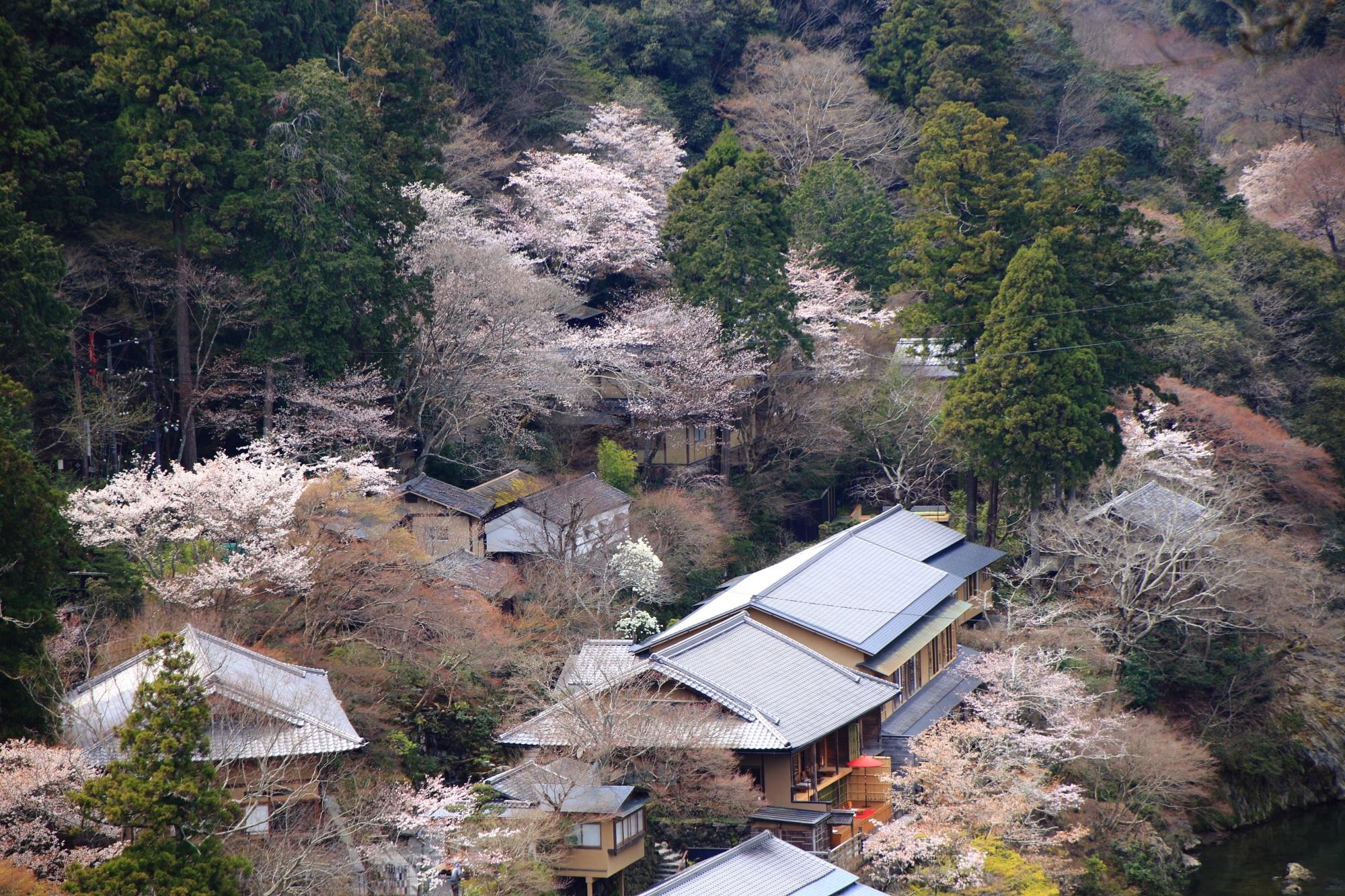 桜がいっぱいの星のや付近