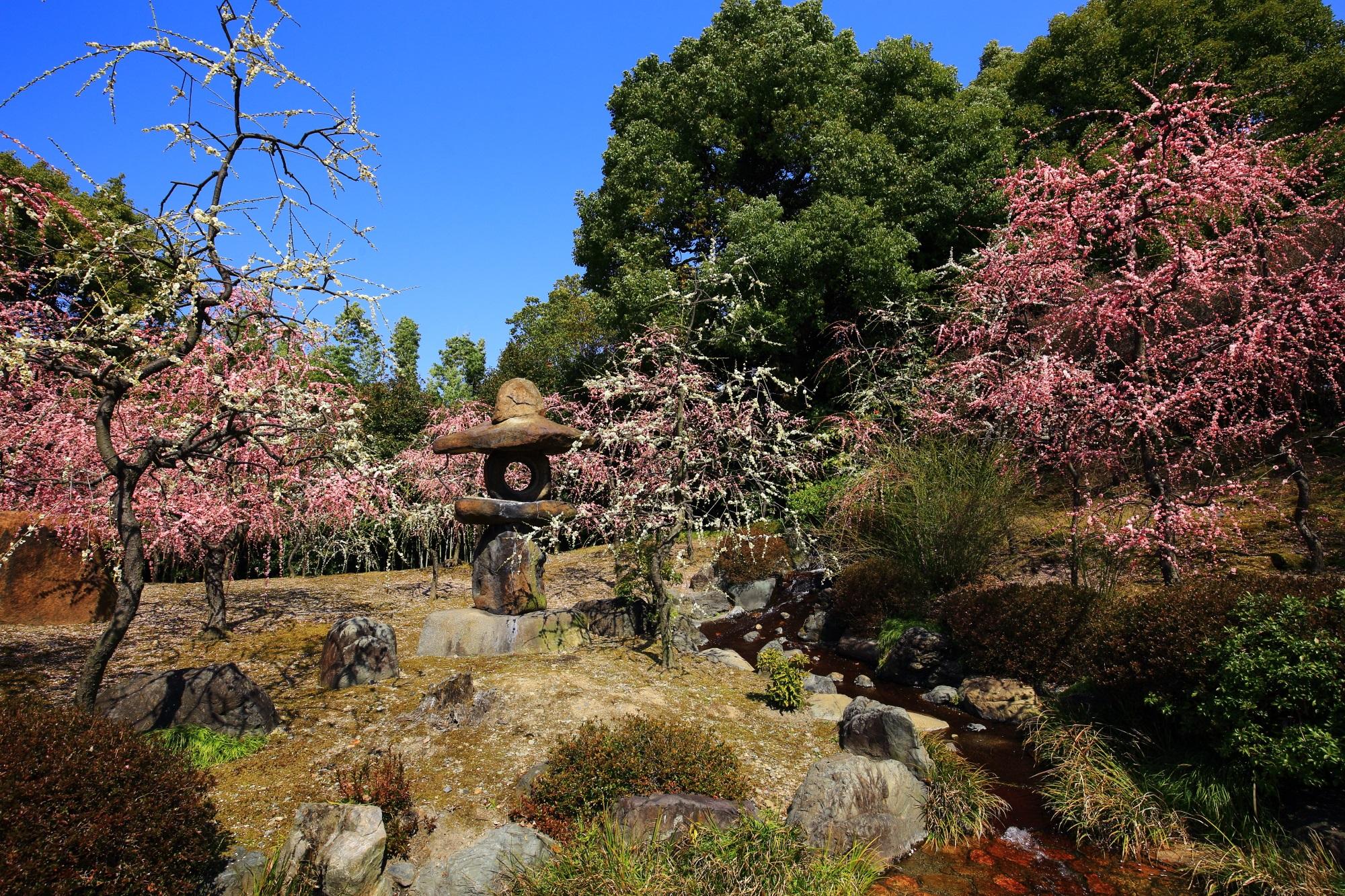 嫌なことも吹き飛ぶしだれ梅につつまれた城南宮神苑の絶景