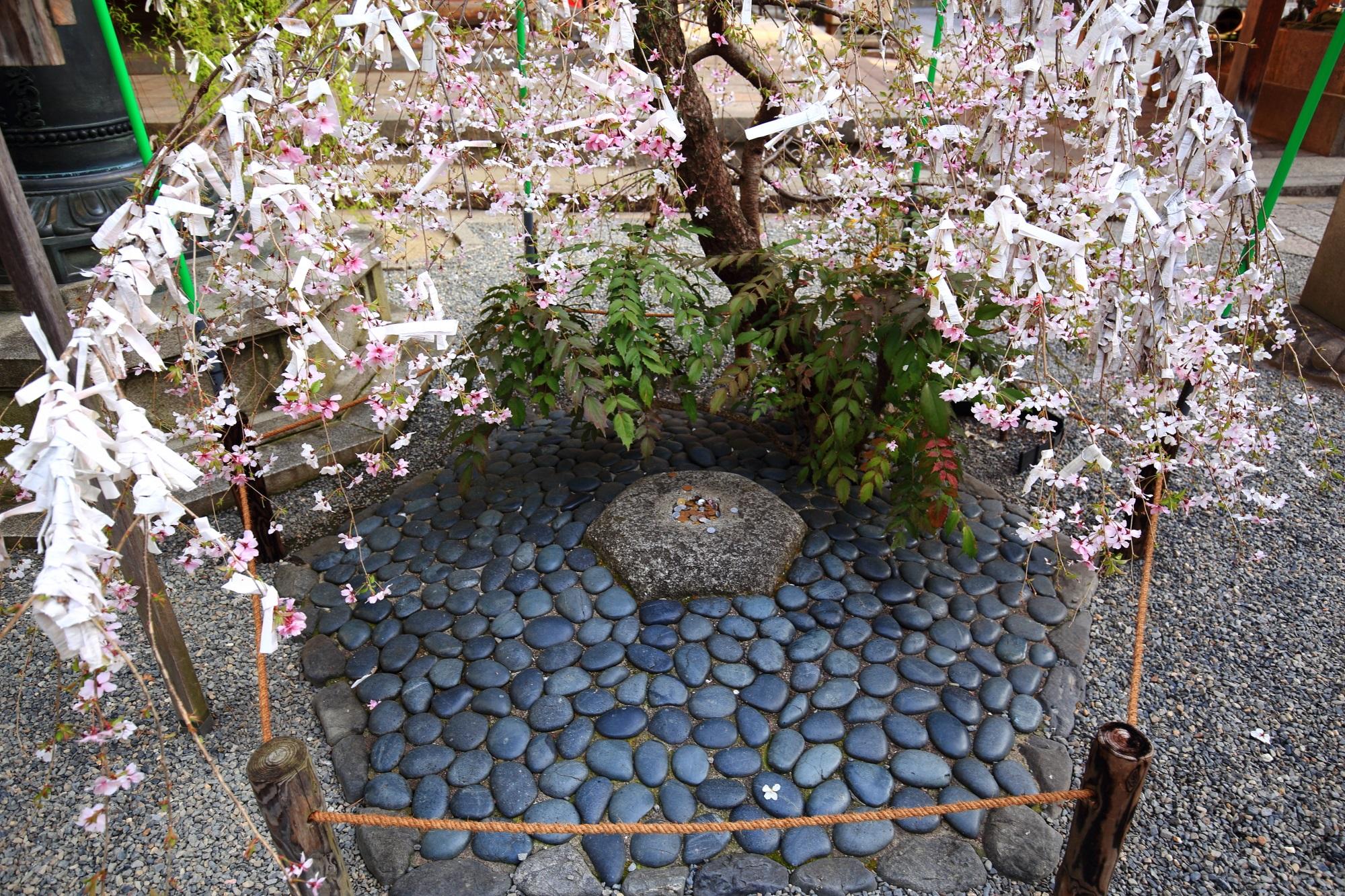 六角堂のへそ石と桜