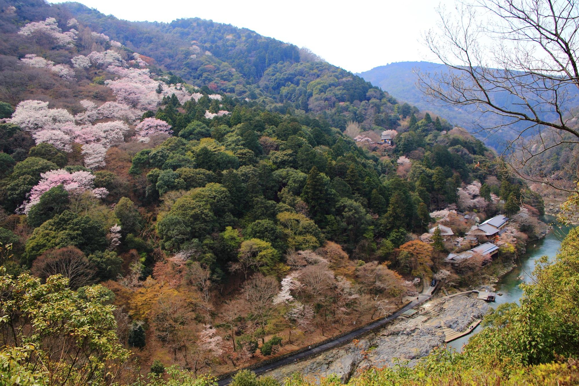 亀山地区から眺める嵐山の素晴らしい桜と春の情景