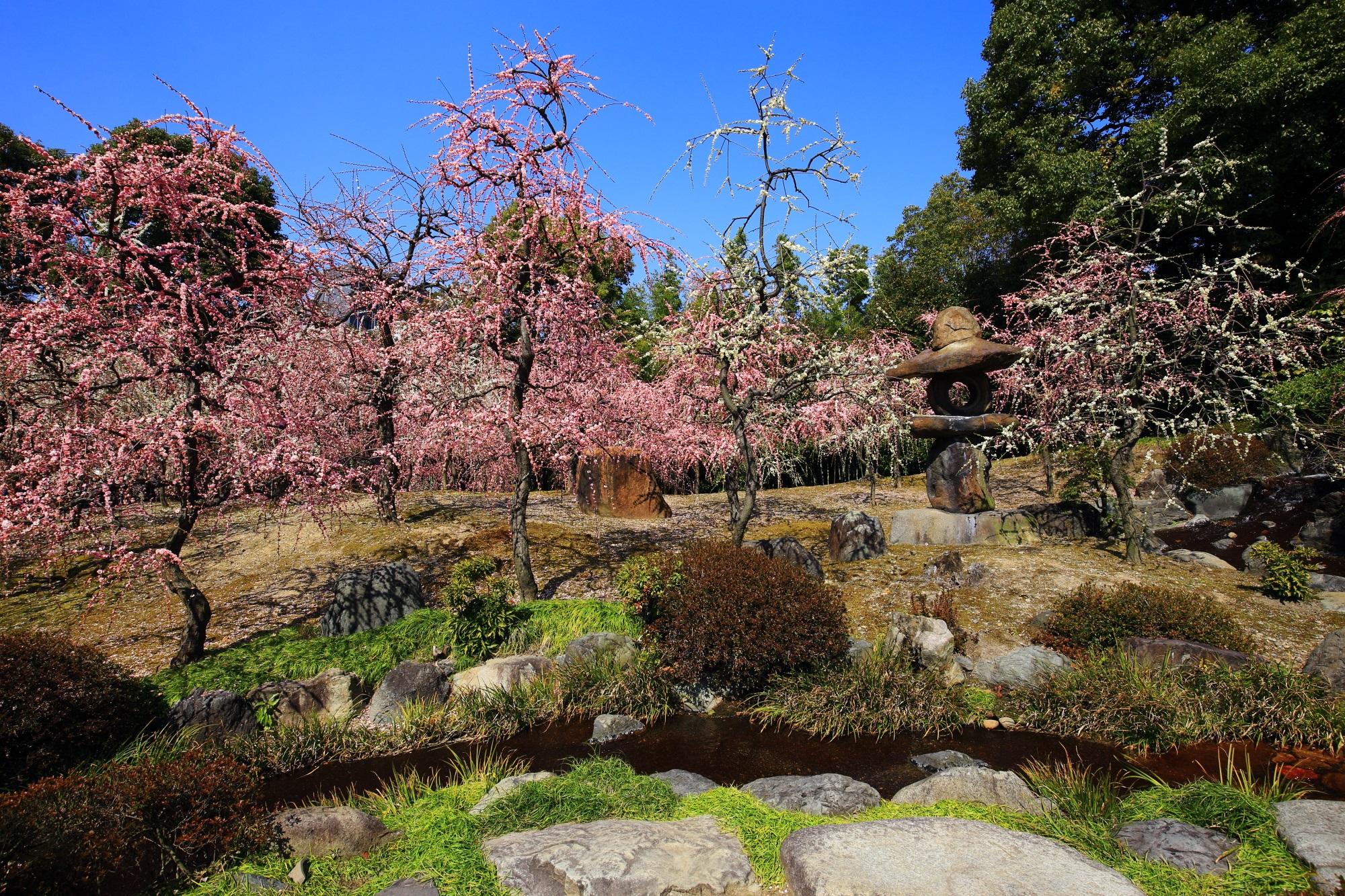 城南宮の素晴らしいしだれ梅と春の情景