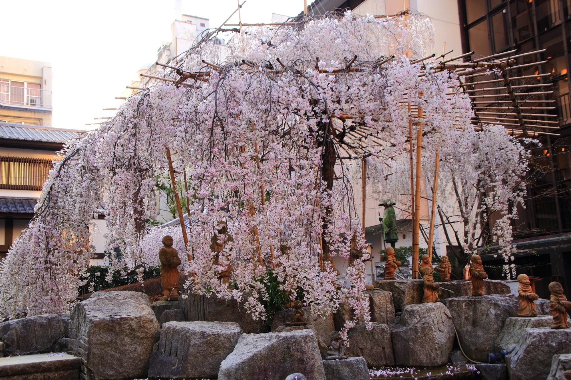 桜の穴場の六角堂の御幸桜(しだれ桜)