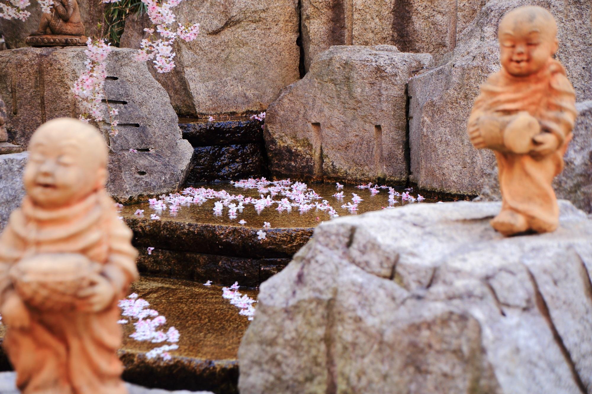 六角堂の羅漢と散り桜