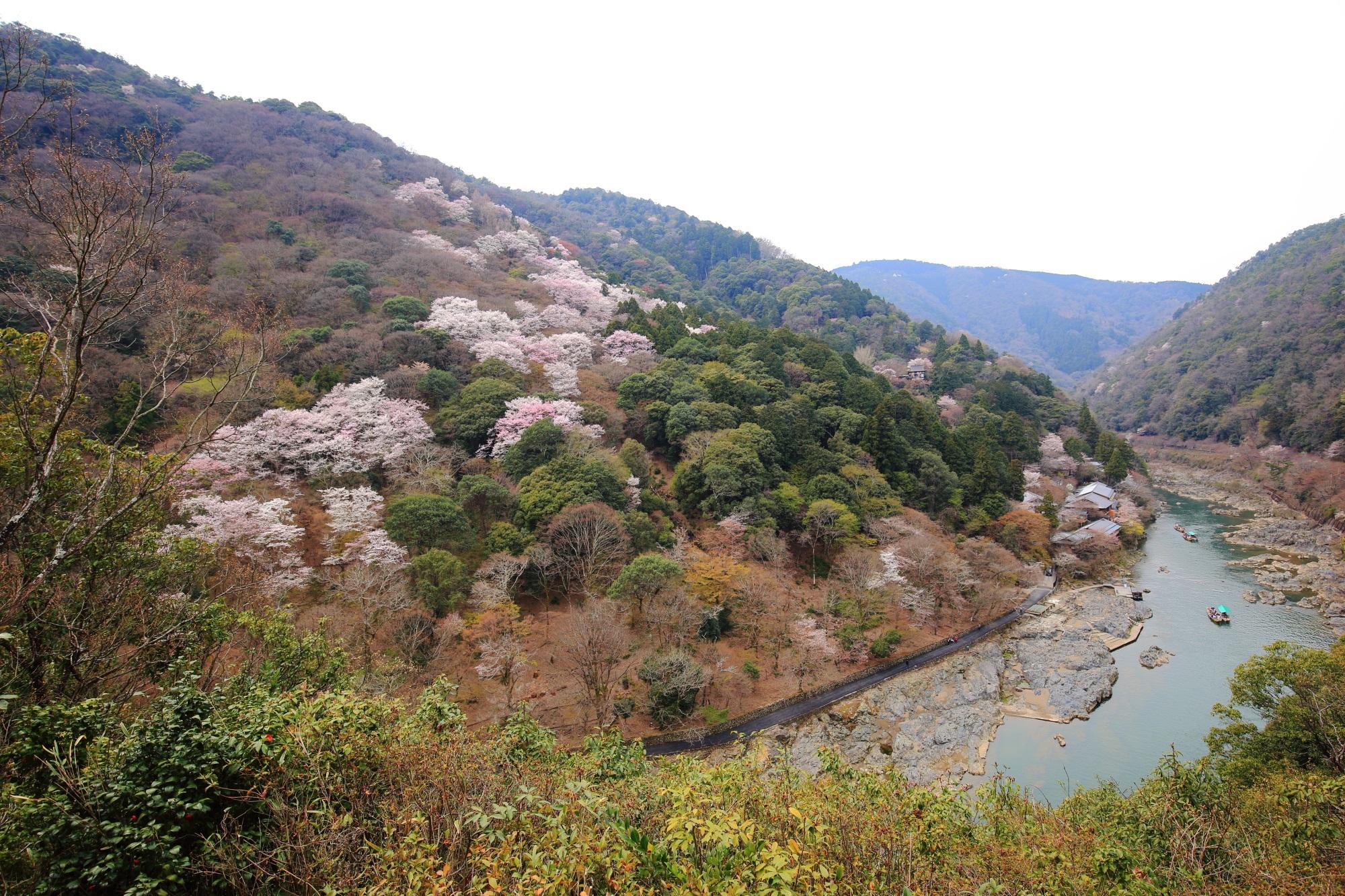 嵐山公園 亀山地区から眺めた春色の嵐山