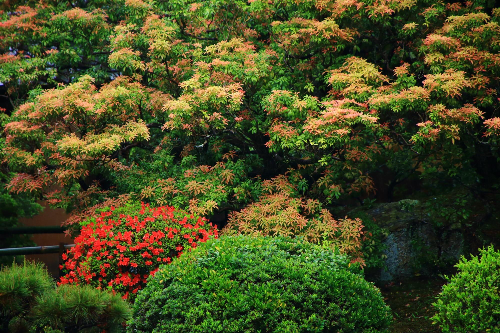 青蓮院の淡いオレンジ色の葉をしている木