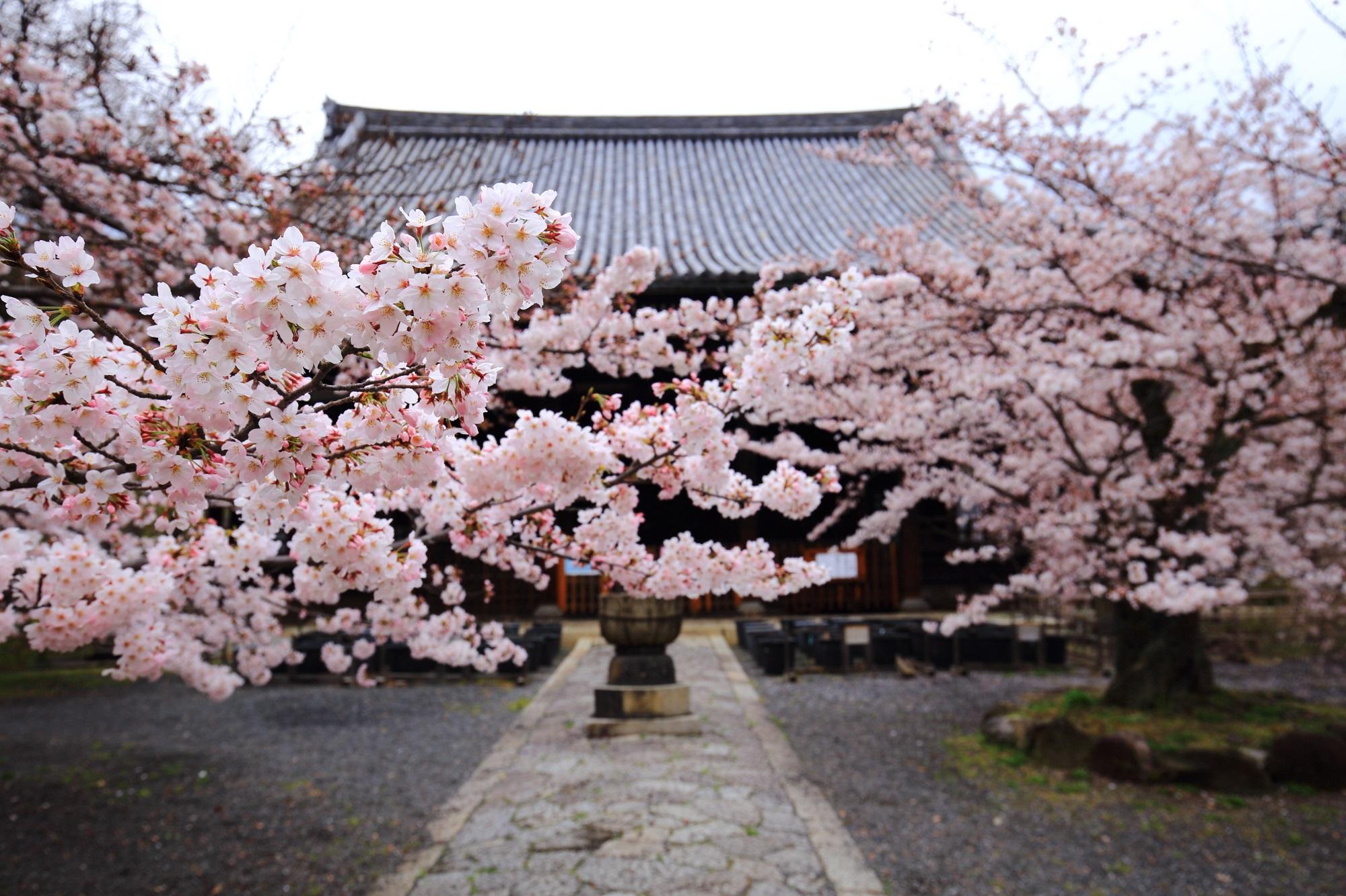 マンション建設予定の立本寺の素晴らしい桜と春の情景