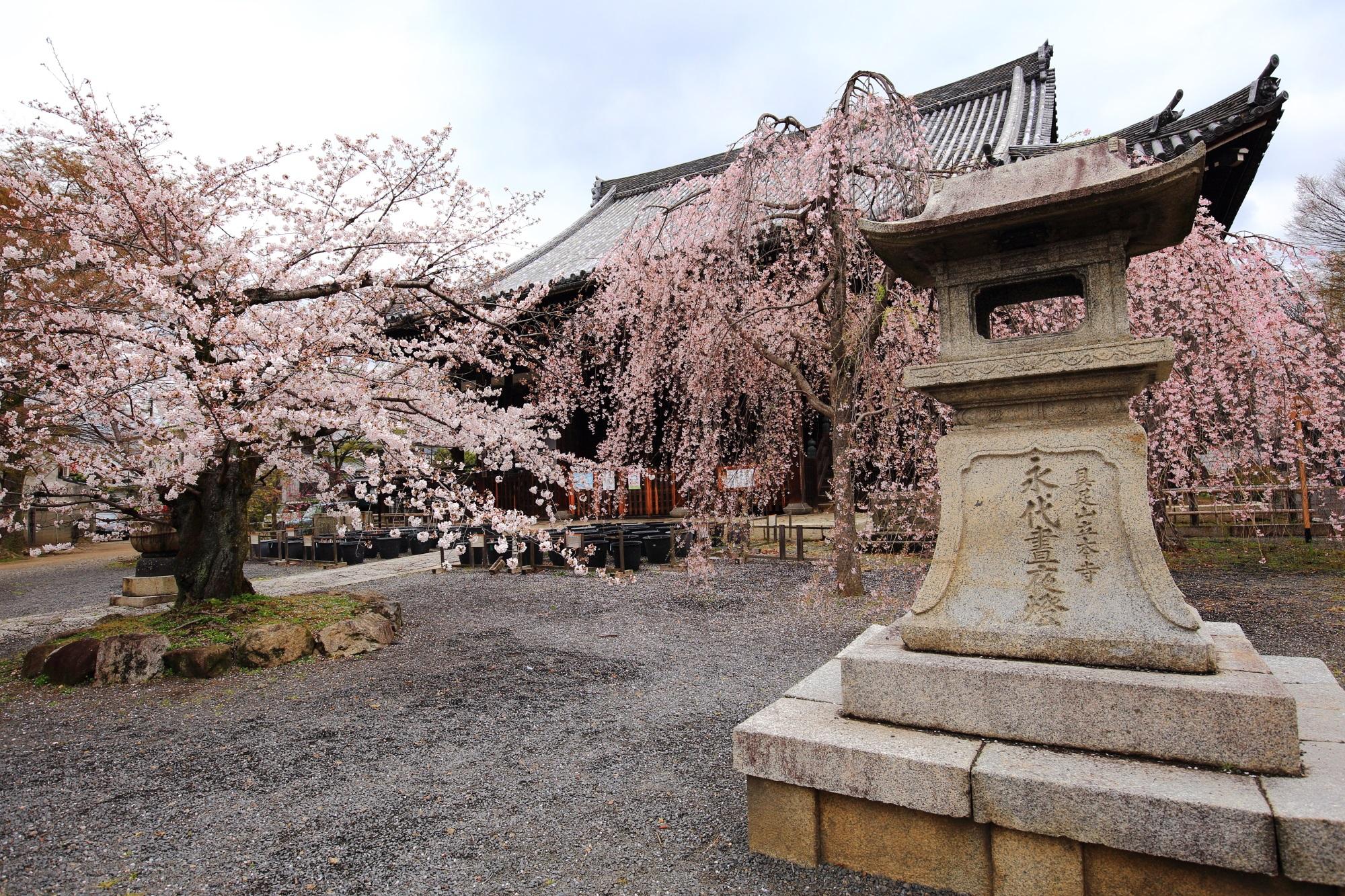 四角くて少し変わった燈籠と絵になる桜
