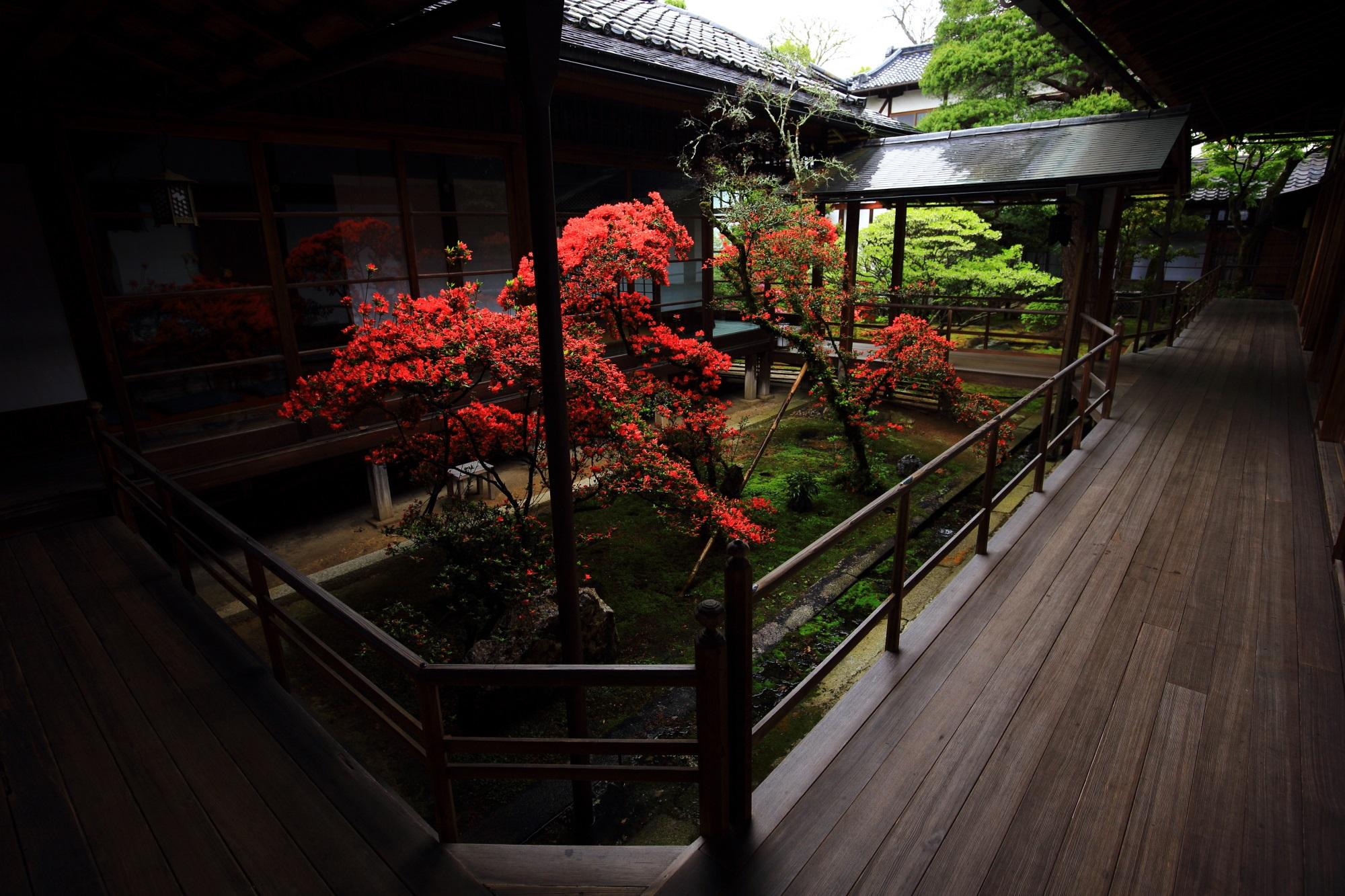 妙心寺大心院の独特の雰囲気を放つ本堂北側の中庭のキリシマツツジ