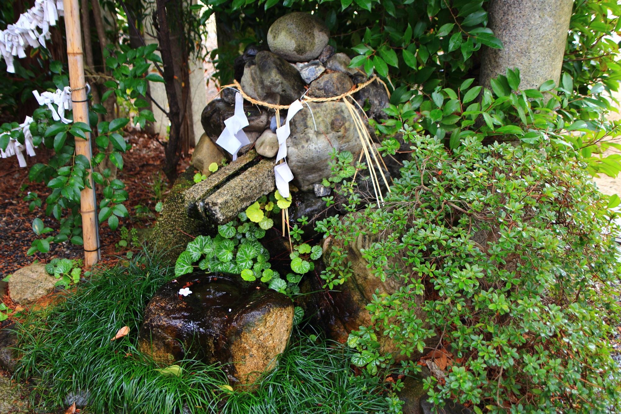 綺麗な緑や植物に包まれている金龍水