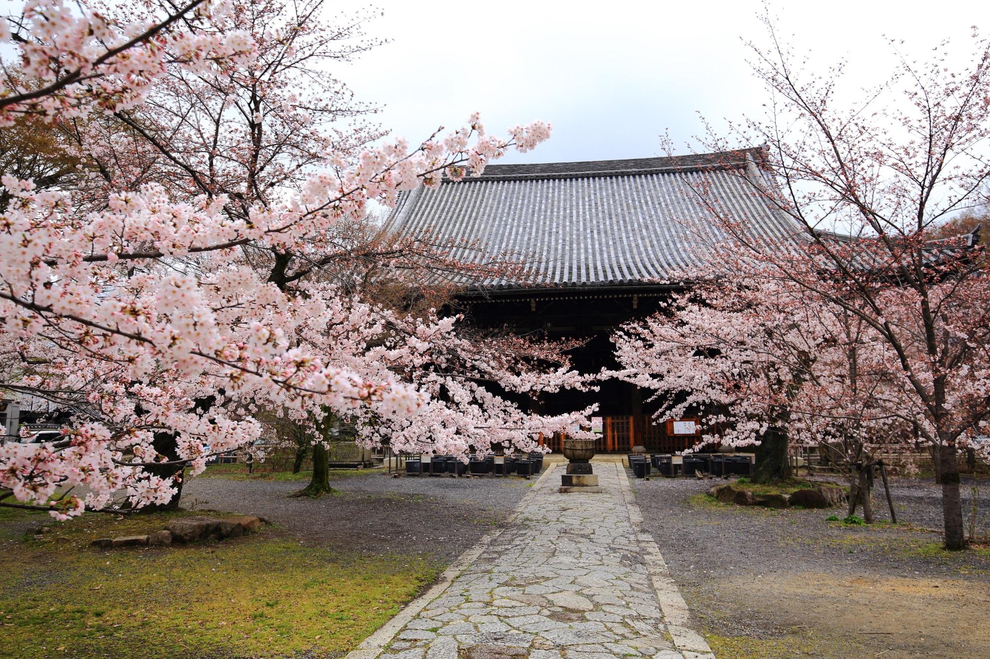 立本寺の本堂と桜