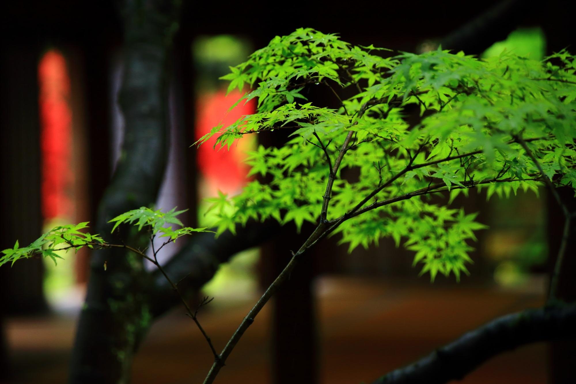 ぼやけた赤いツツジと美しい新緑