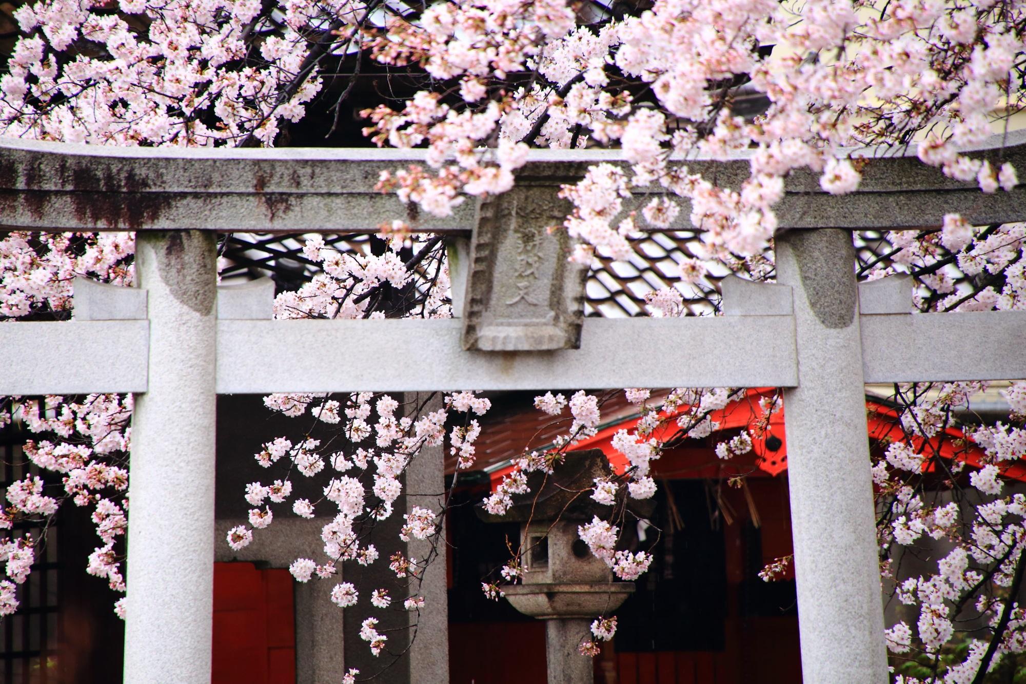 Kyoto Rokusonno-jinja cherry blossoms