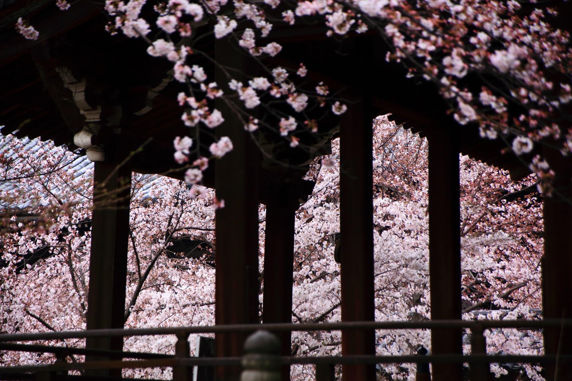 見事な春の空間が広がる刹堂の柱の間から見える桜
