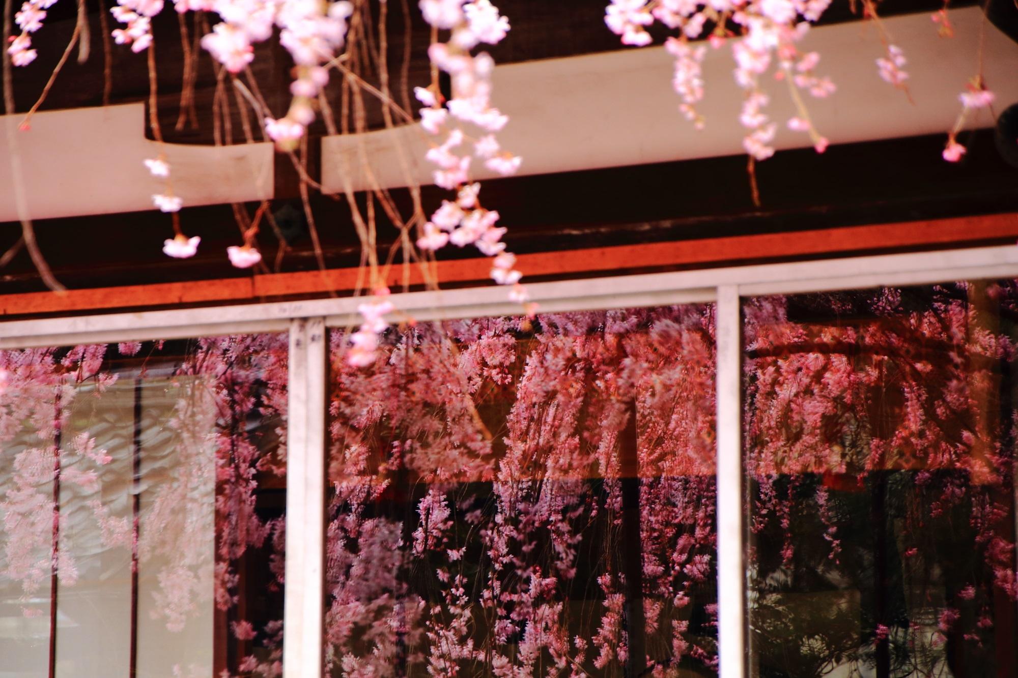 窓(硝子)に映るしだれ桜