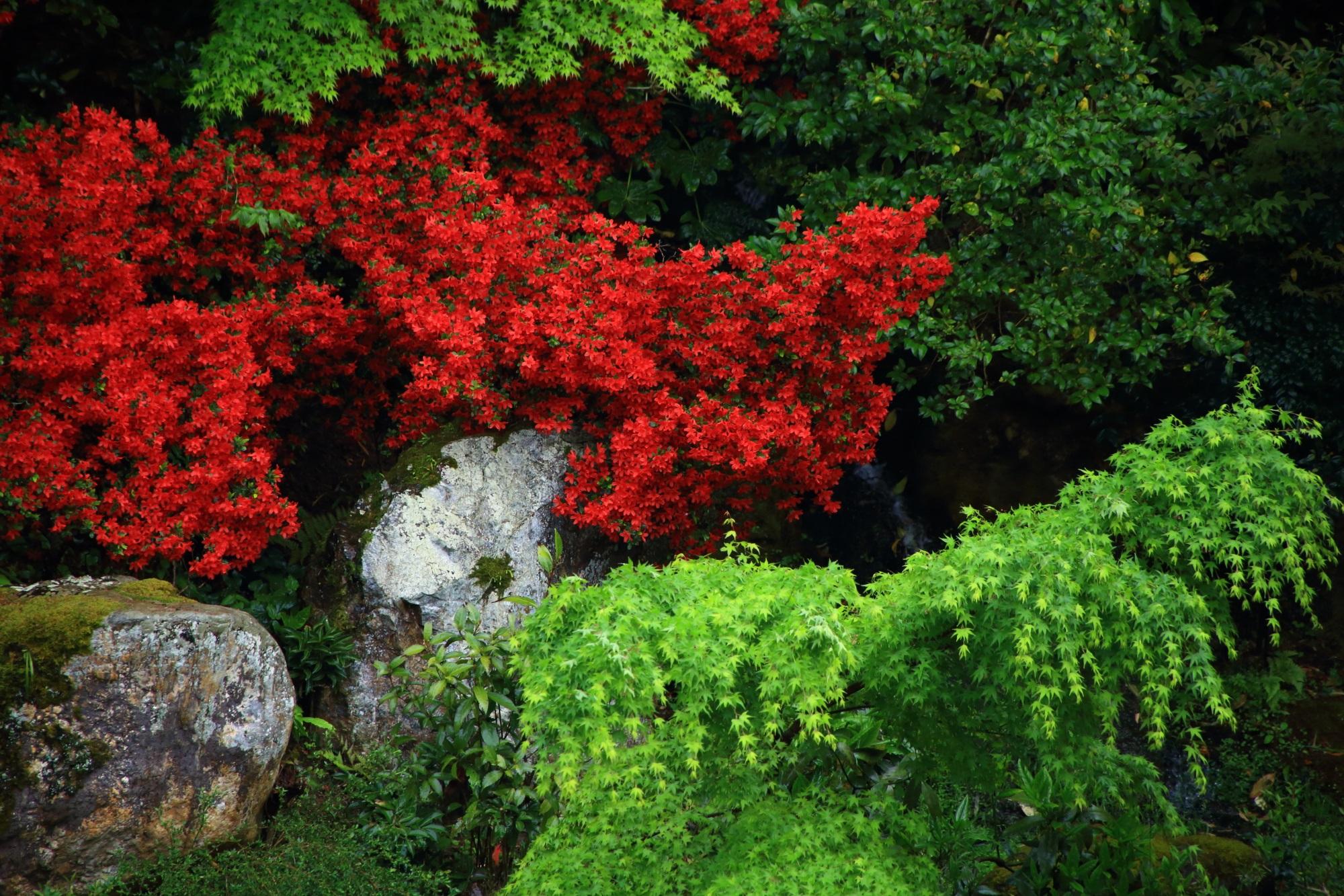 目を引き付ける鮮烈な赤と緑