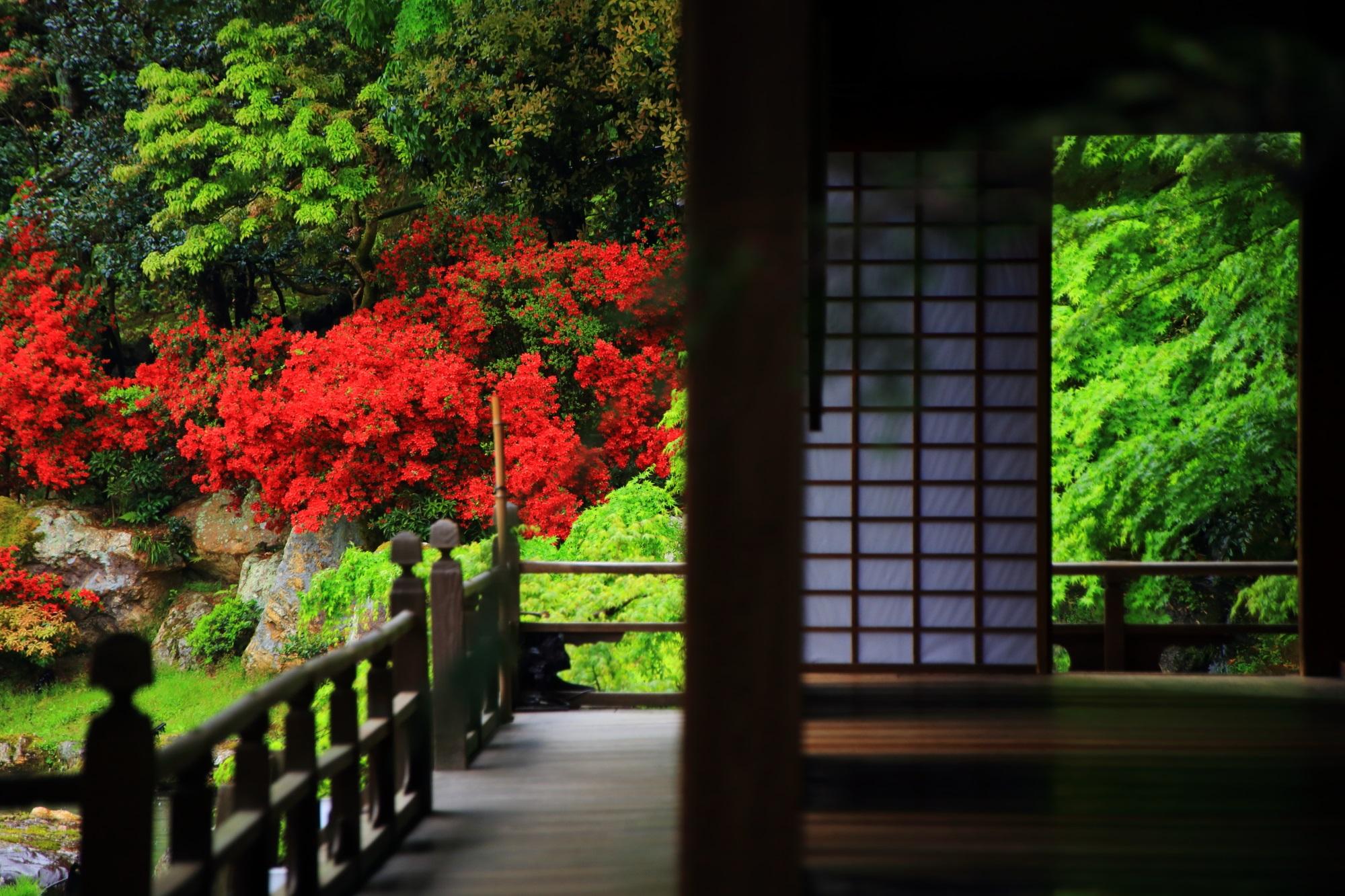 青蓮院の小御所の向こうに見える極上のキリシマツツジと新緑