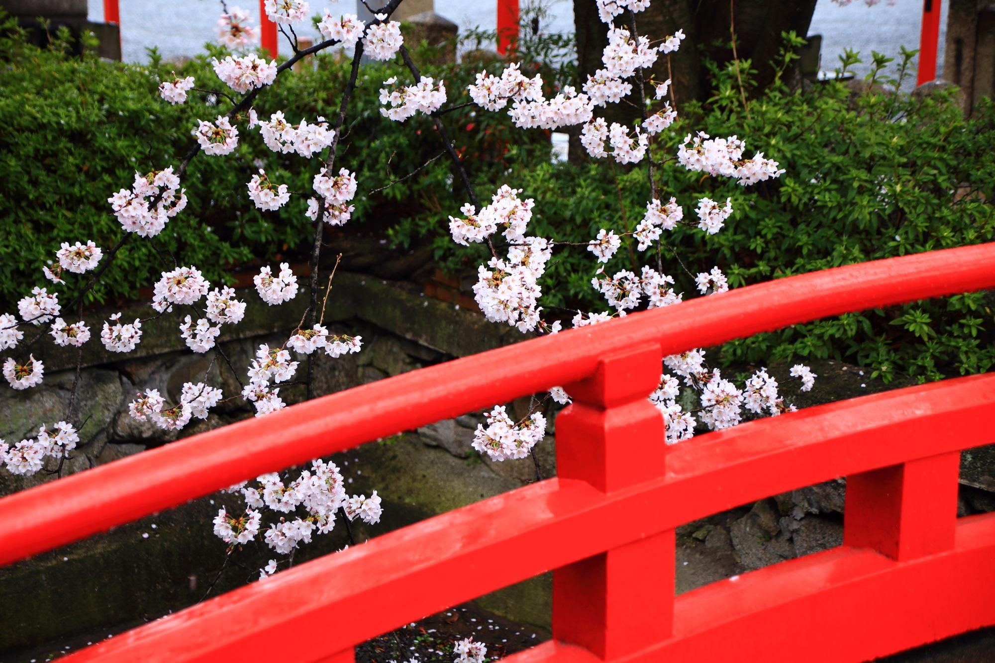 六孫王神社の雨の日の絵になる桜の風景