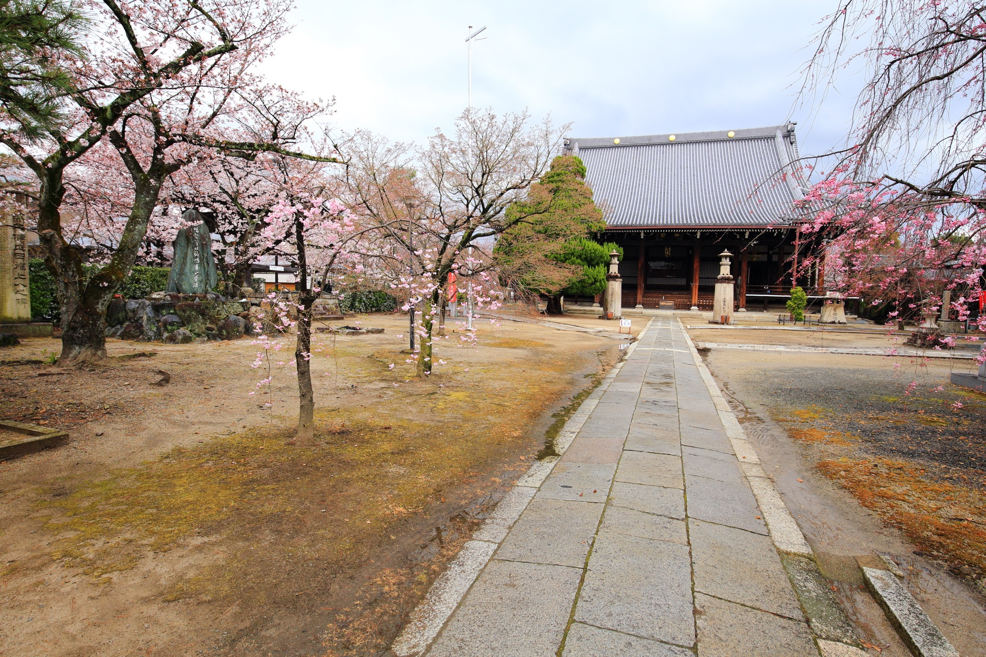 妙顕寺(みょうけんじ)の本堂と桜