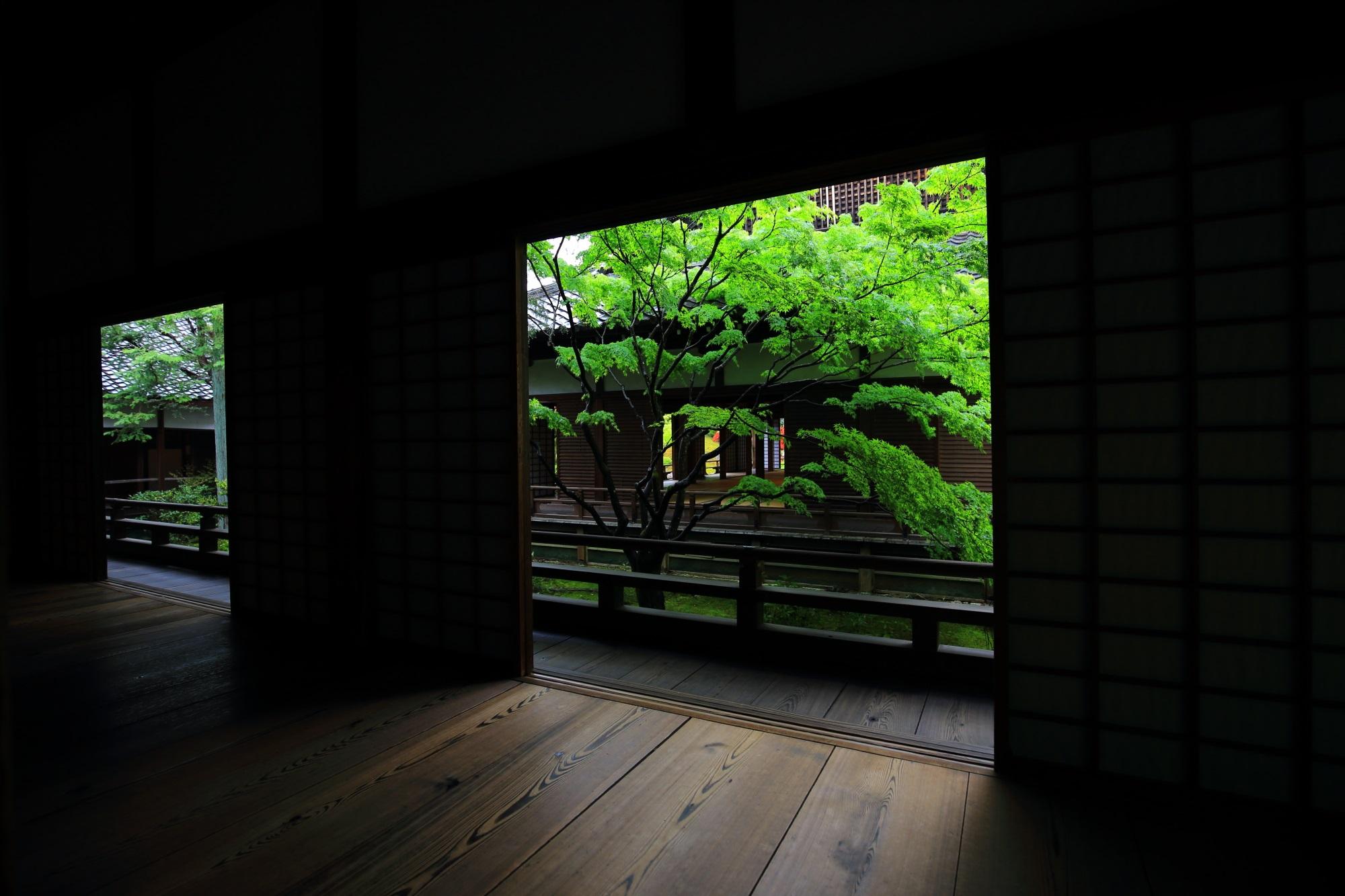 宸殿から眺めた額縁の中の存在感を放つ鮮やかな緑