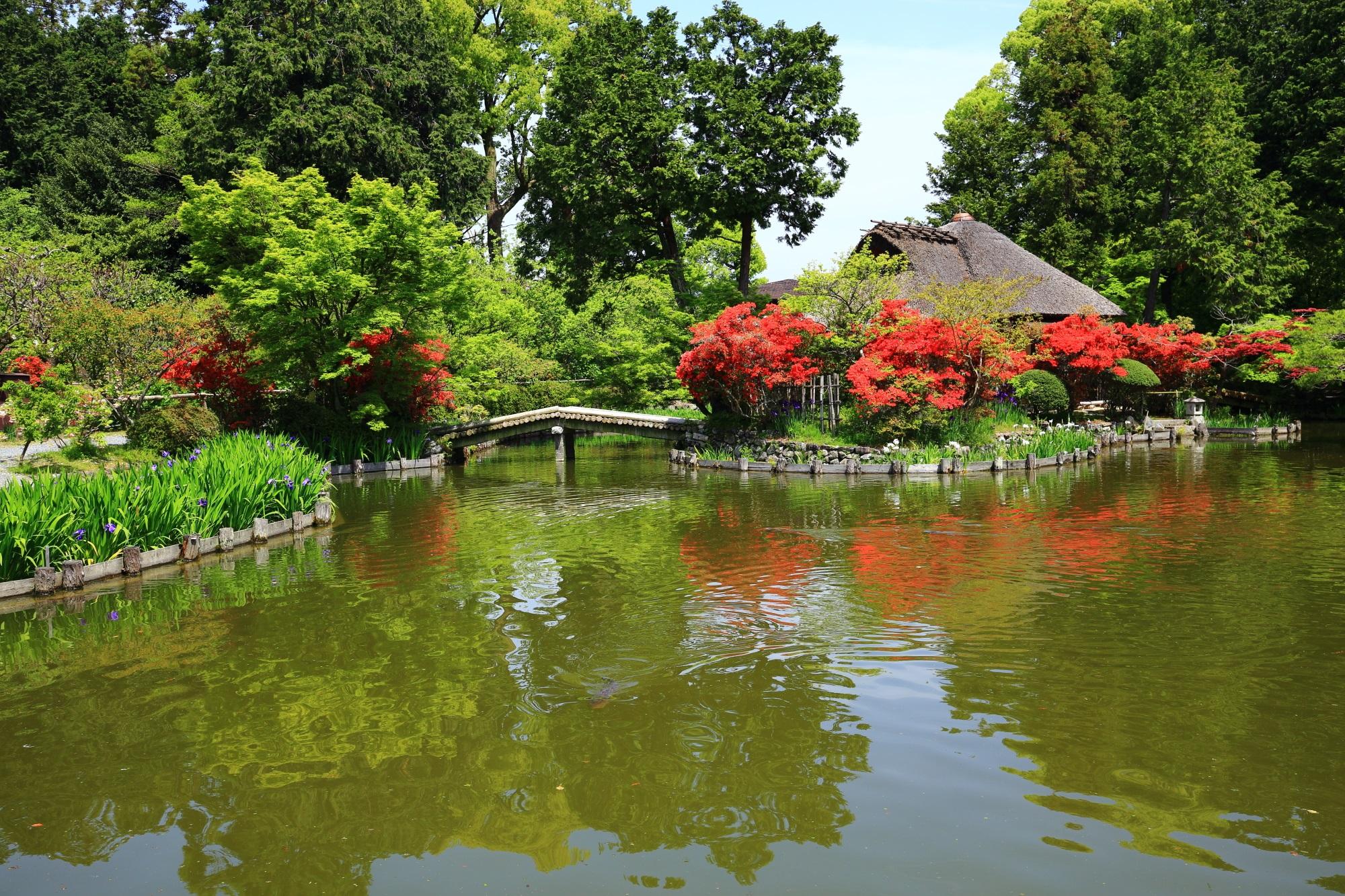 梅宮大社の水辺で輝く鮮烈な赤色とキリシマツツジの水鏡