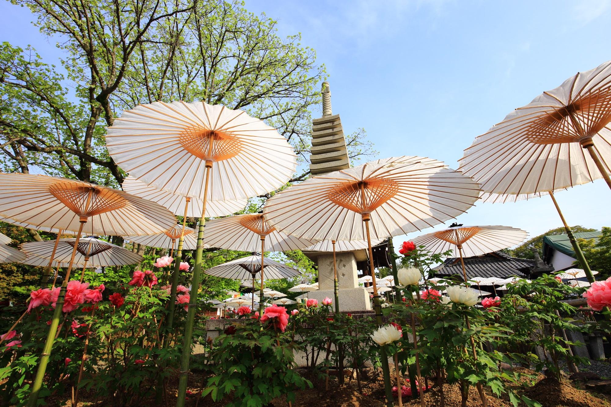 独特の情景を醸しだすたくさんの和傘