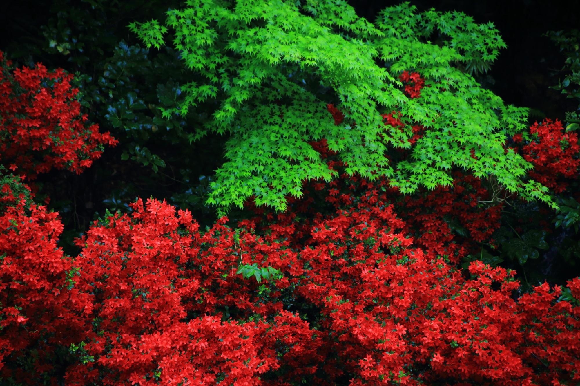 新緑の緑とツツジの赤の強烈なコントラスト