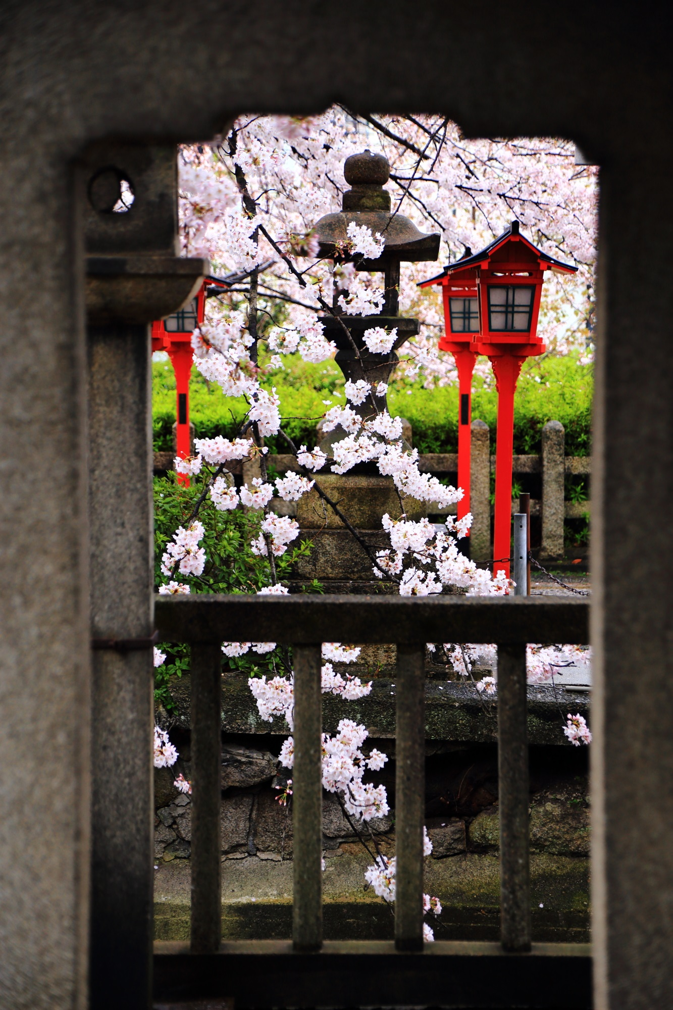 六孫王神社の素晴らしい雨の桜と春の情景