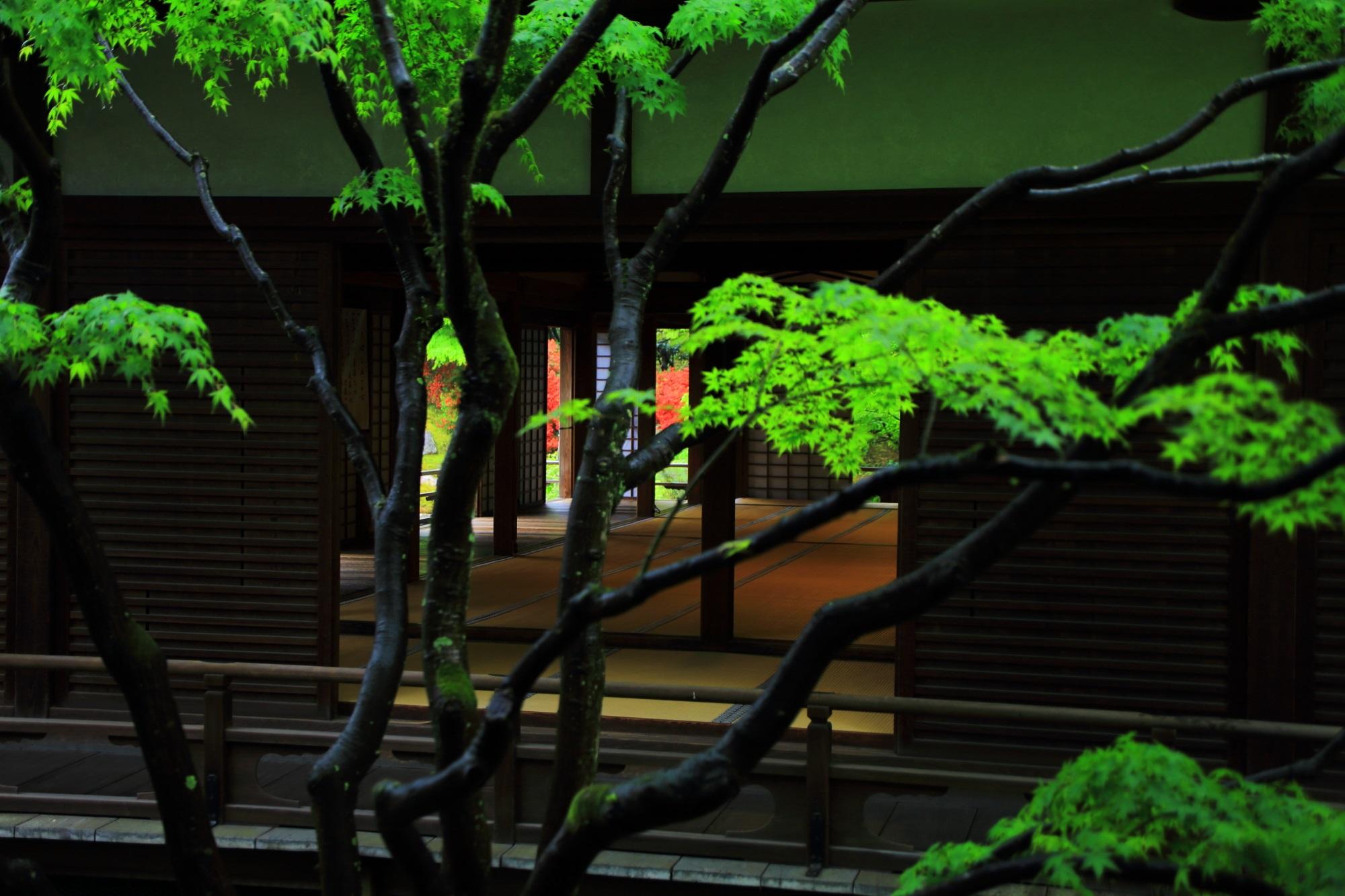 新緑と一緒に見える小御所の向こうの庭園の赤いキリシマツツジ