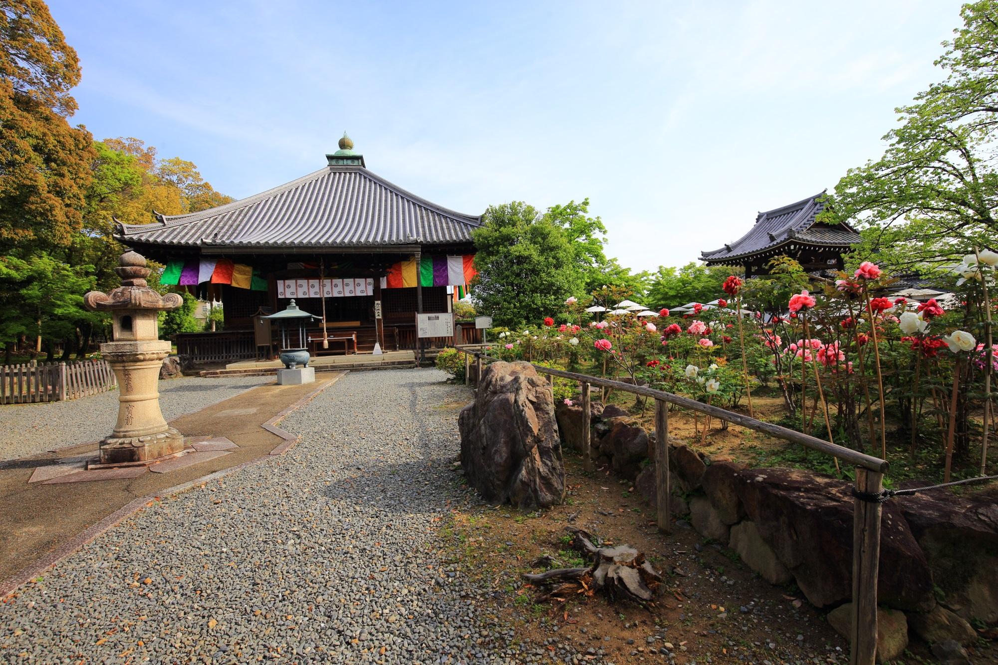 少し変わった形の屋根をした乙訓寺の本堂と牡丹の花