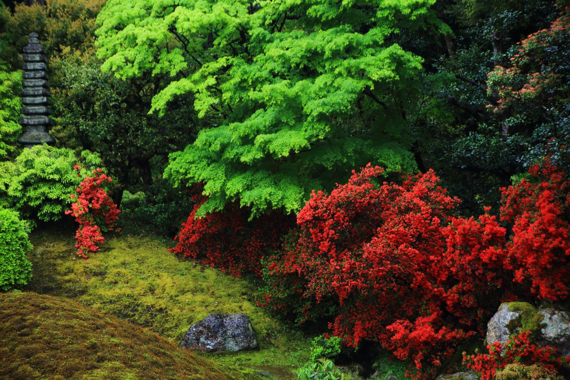 長閑な春を彩る鮮やかな赤色と緑色
