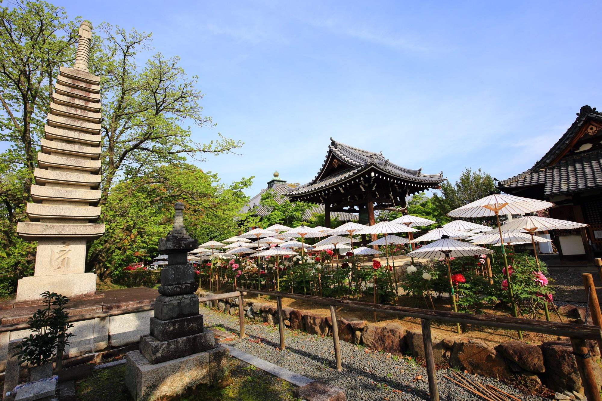 乙訓寺の非常に絵になる牡丹と春の風景