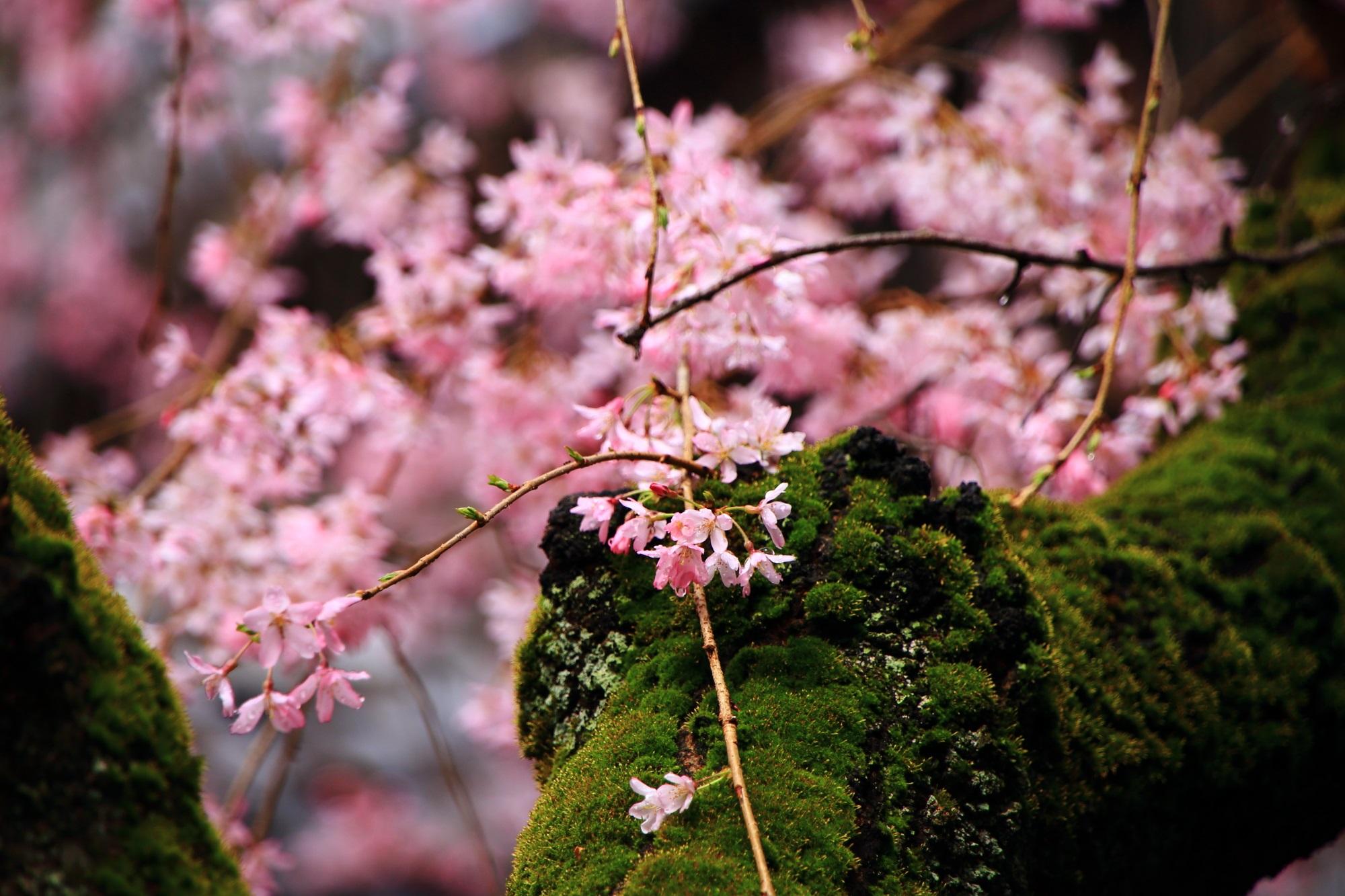 木に生えた緑の苔の上で華やぐピンクの花