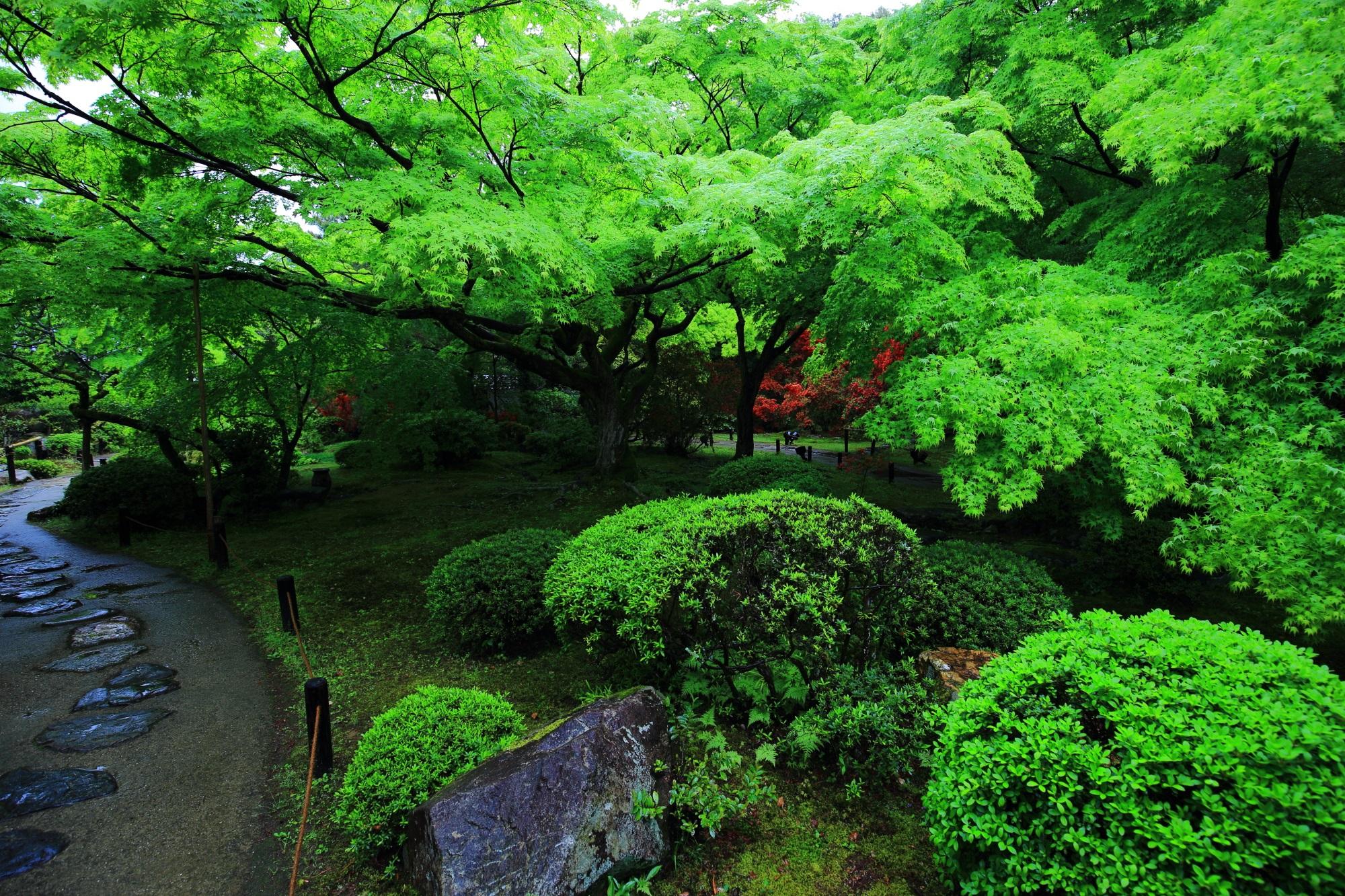 鮮やかな緑がお出迎えの青蓮院の「霧島の庭」