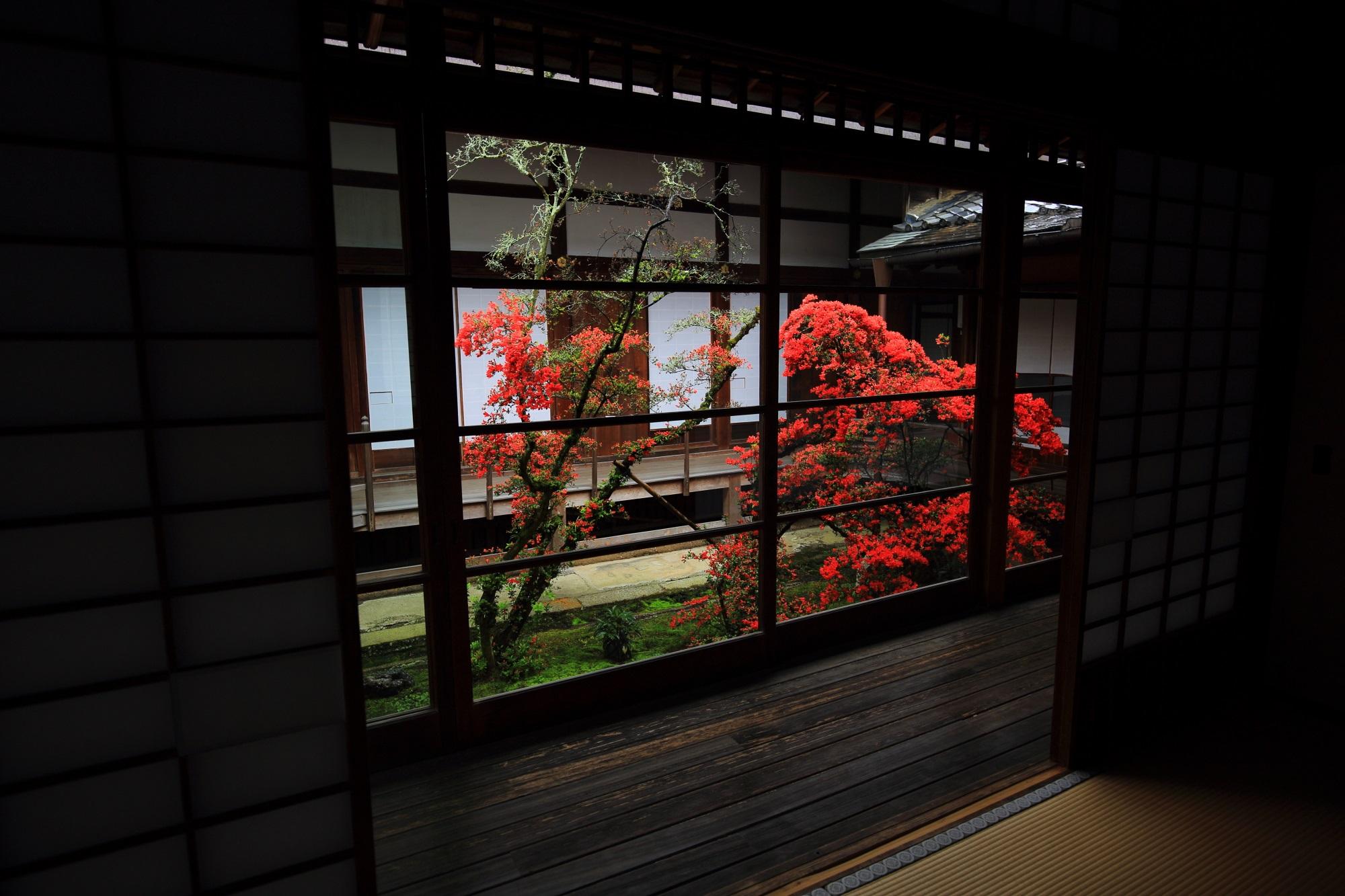 また雰囲気が違ってくる書院から眺めた中庭の赤いキリシマツツジ