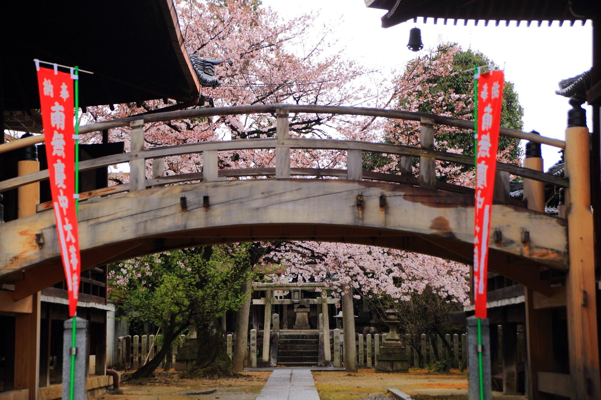 妙顕寺の末社の桜