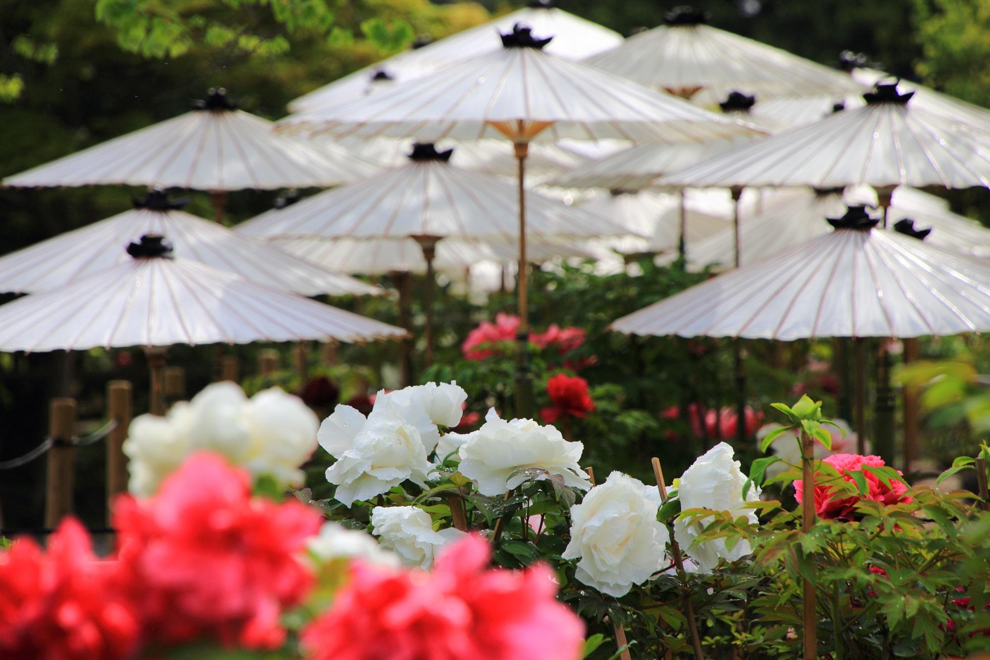 長閑で賑やかな春色が溢れる乙訓寺
