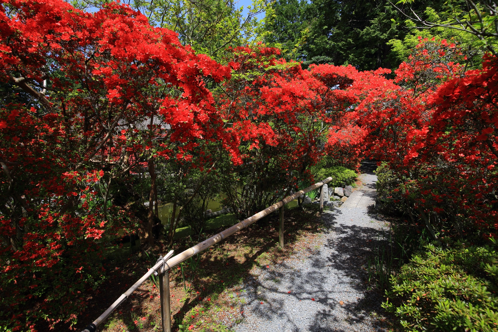 輝く赤い花につつまれる梅宮大社の神苑