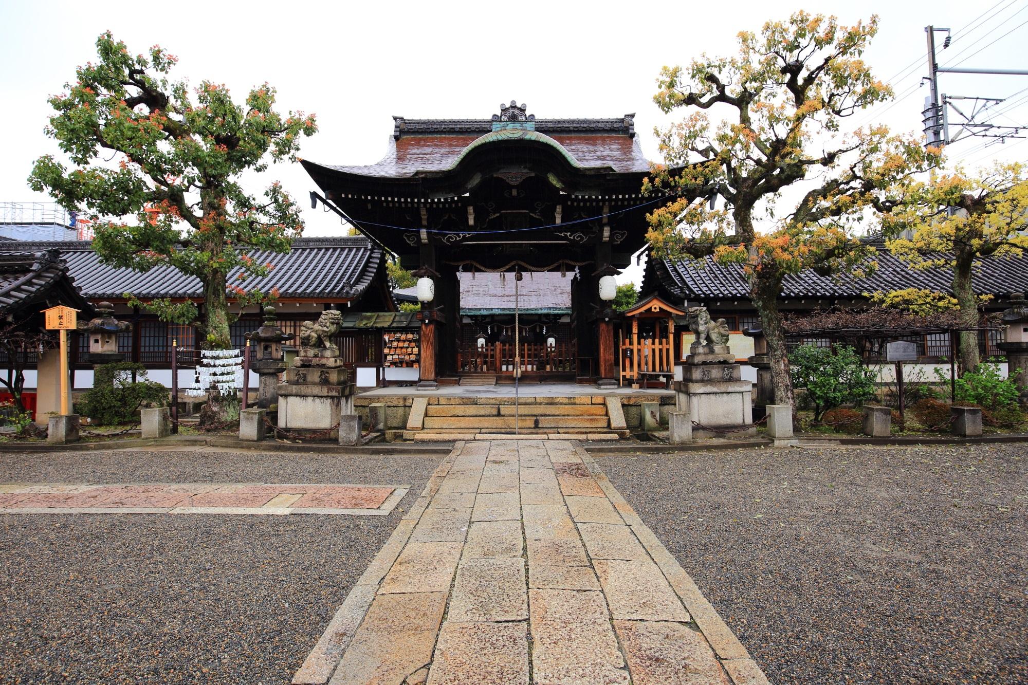 立派な木が見守る六孫王神社の拝殿と本殿