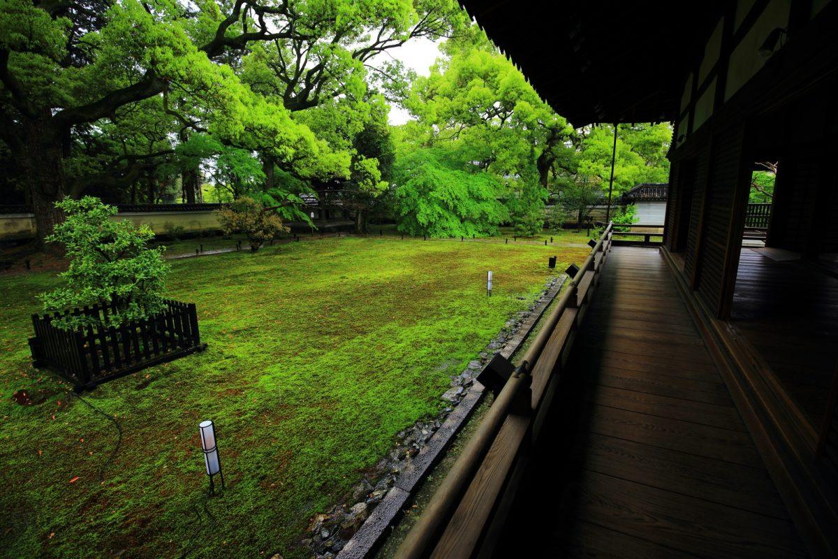 爽やかで深い緑の空間が広がる青蓮院の宸殿の新緑と苔