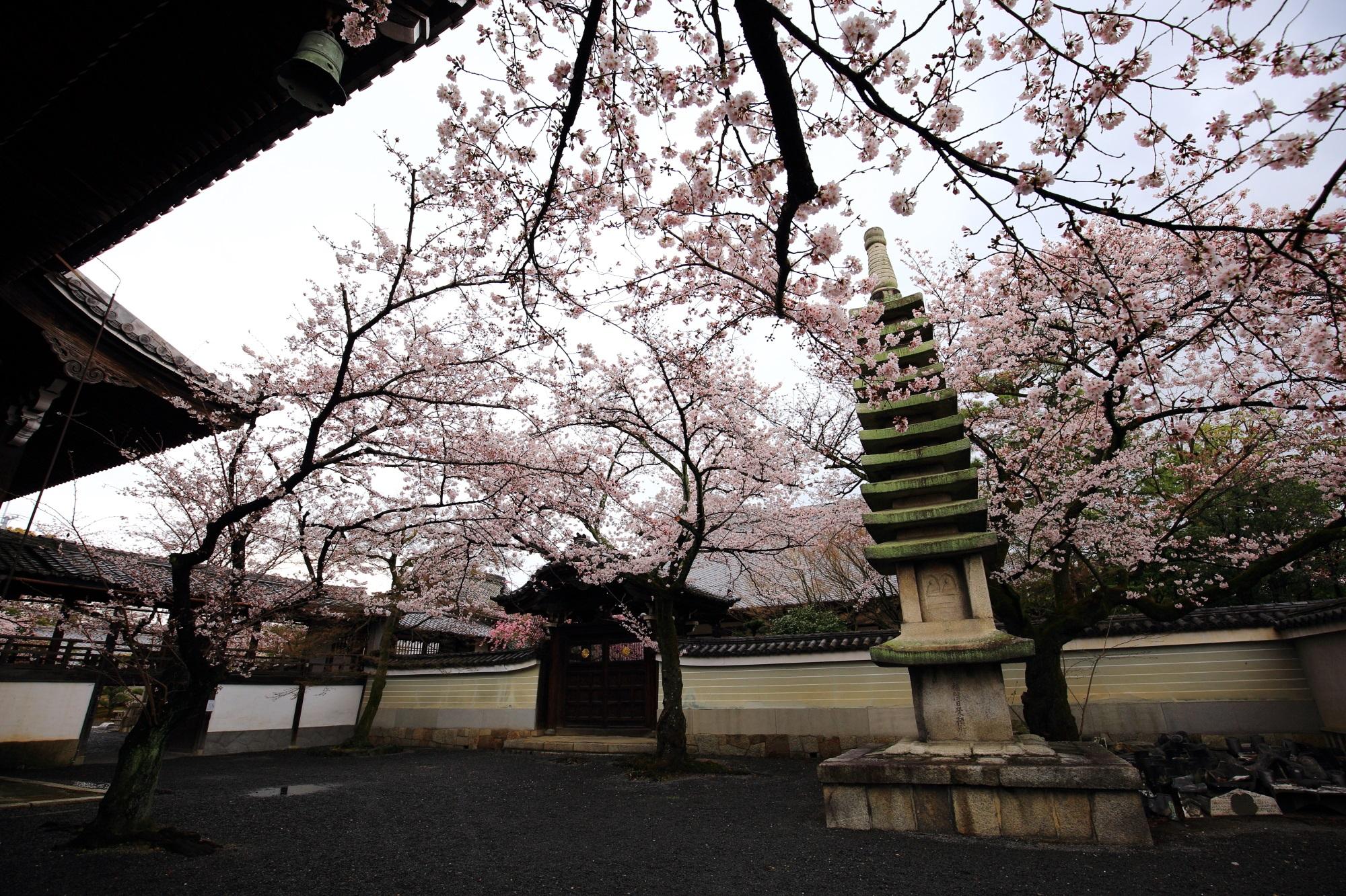 妙顕寺の満開の桜と石塔