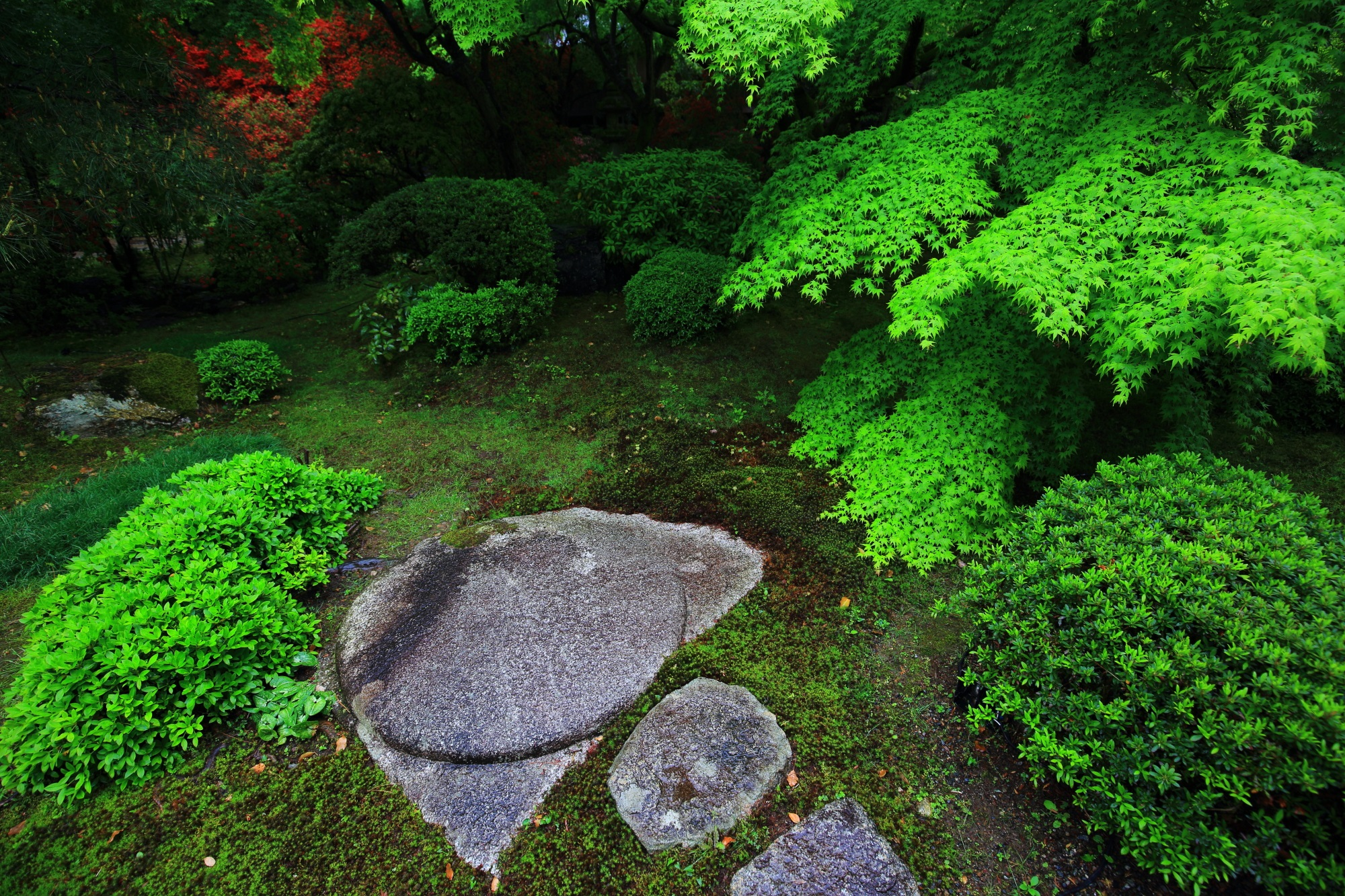 青蓮院門跡の苔や刈込も美しい何とも言えない落ち着いた空間