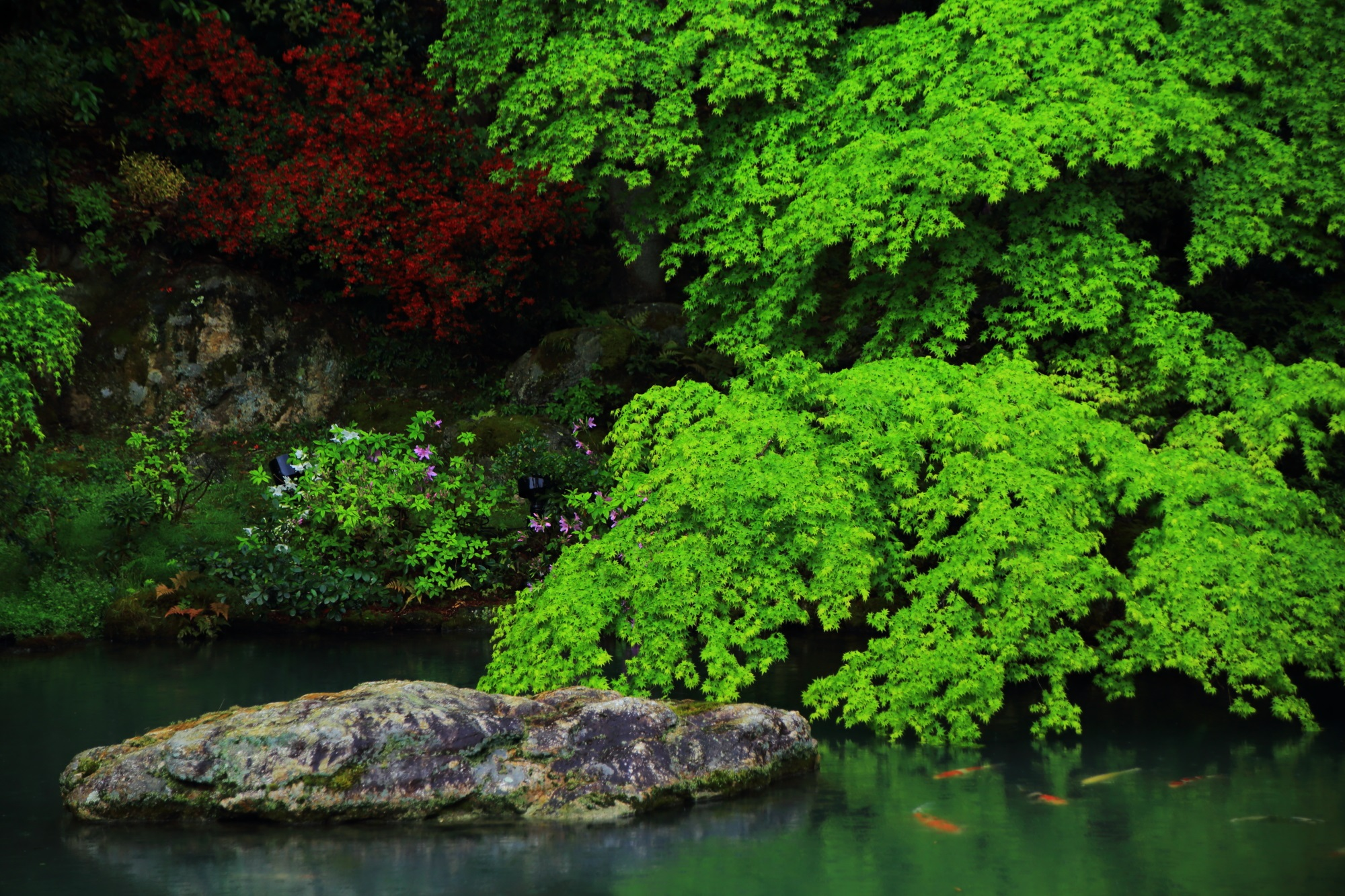 青蓮院の龍心池の絶品の水辺を彩る緑