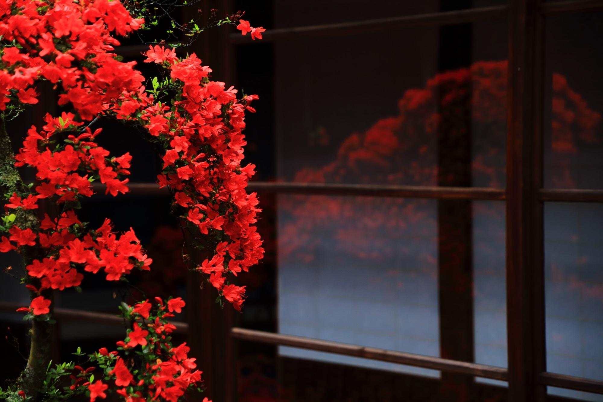 妙心寺大心院のガラスに映るキリシマツツジ