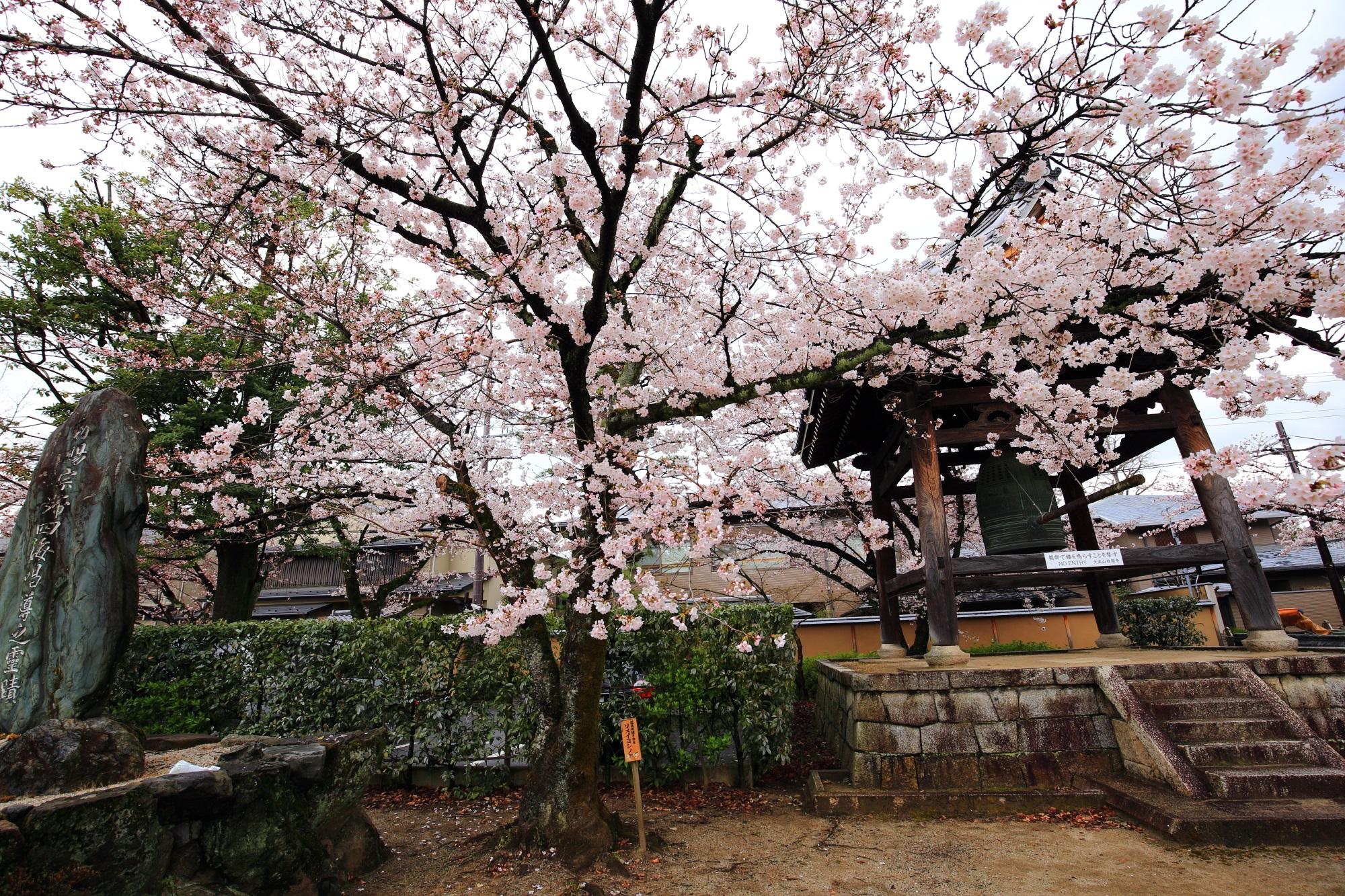 妙顕寺の鐘楼と桜